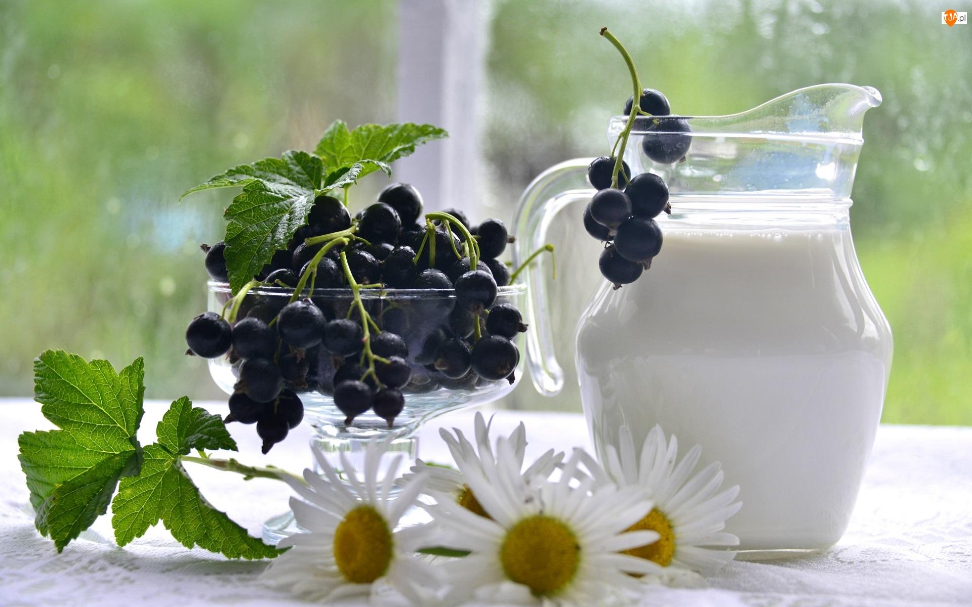 Listki, Dzbanek, Owoce, Kwiaty, Mleko, Czarna porzeczka, Stokrotki, Pucharek