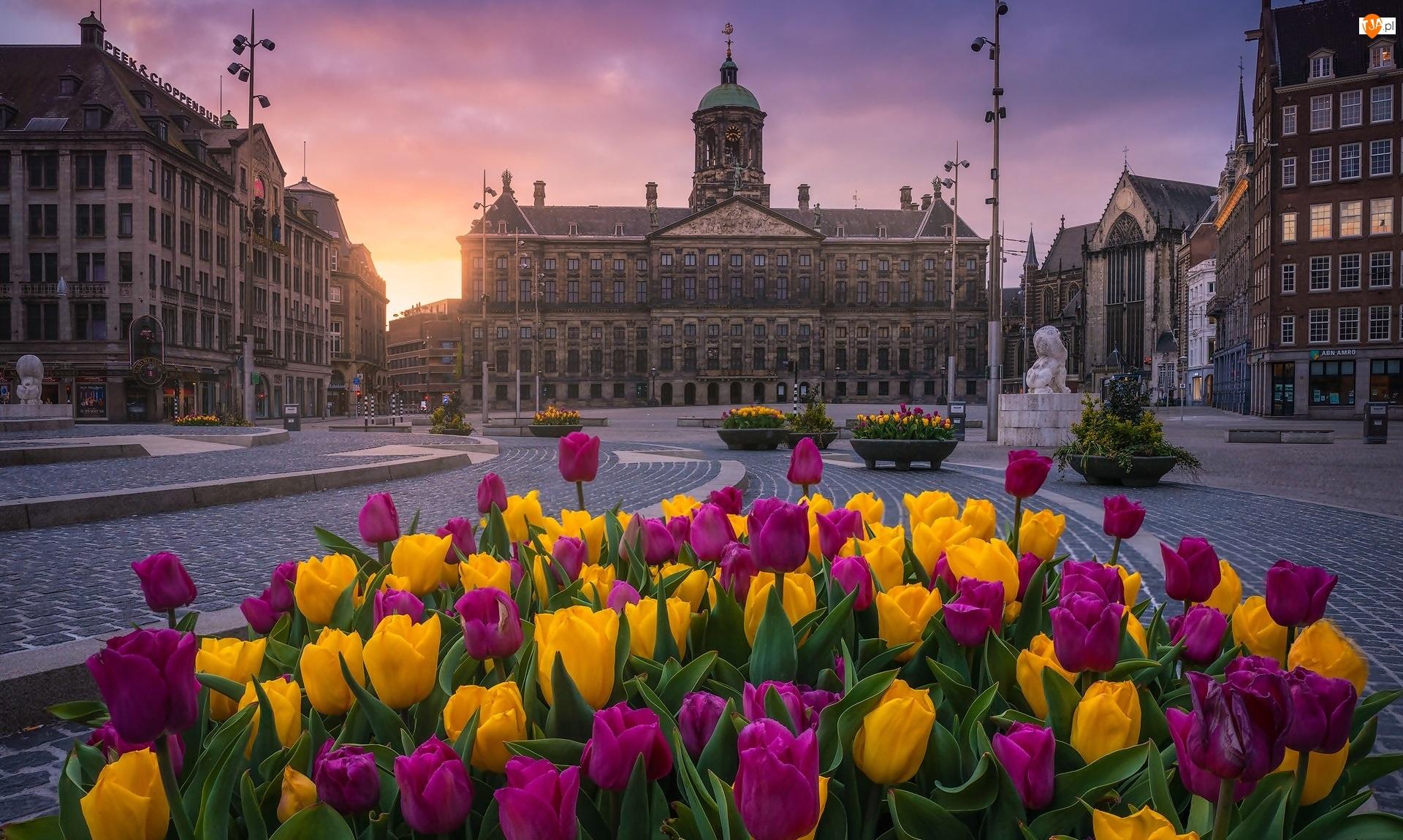 Pałac Królewski, Zachód słońca, Amsterdam, Holandia, Tulipany