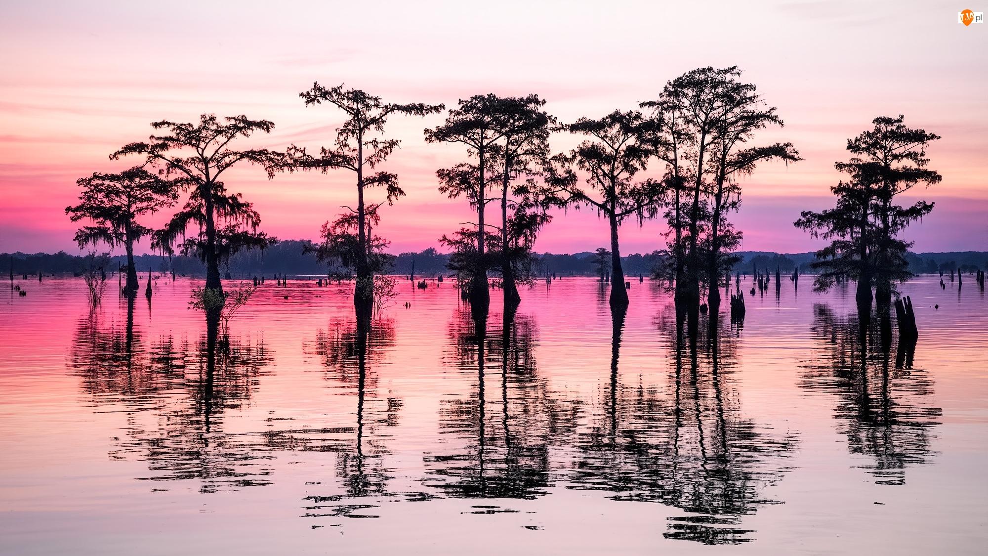 Atchafalaya Basin, Drzewo, Bagno, Luizjana, Cyprys, Mokradło, Stany Zjednoczone, Odbicie