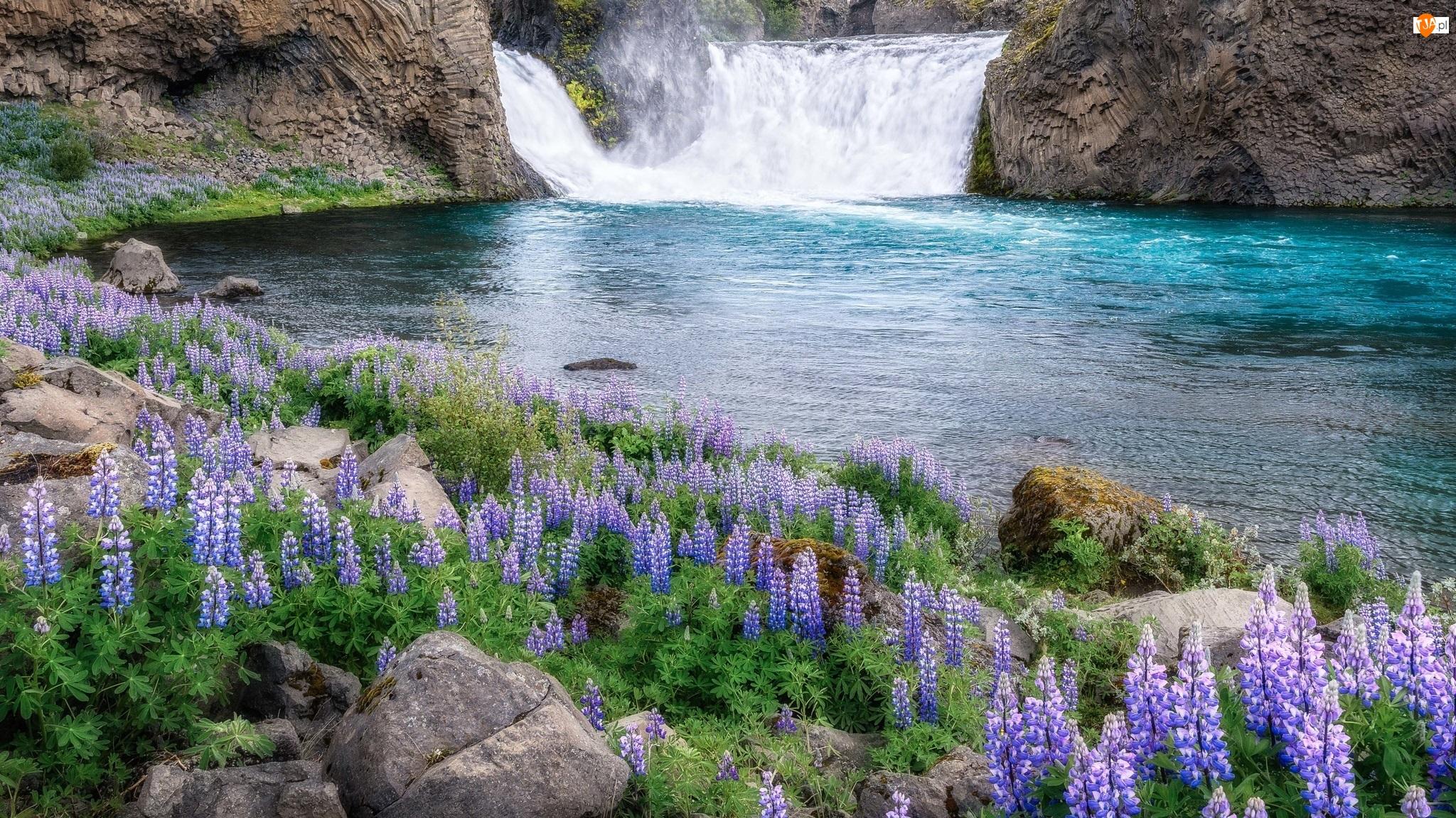 Skały, Wodospad, Kamienie, Łubin, Rzeka, Kwiaty