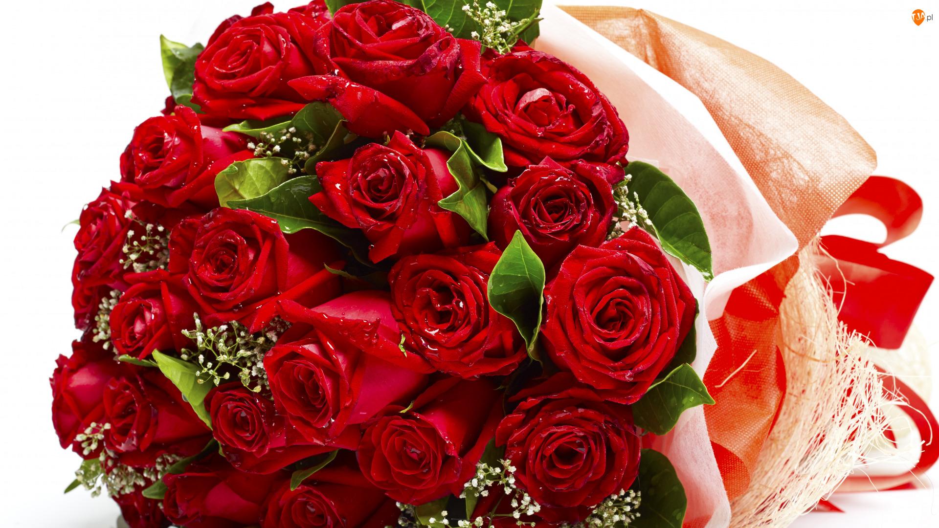 Róże, Kwiaty, Czerwone, Krople, Bukiet, Pąki