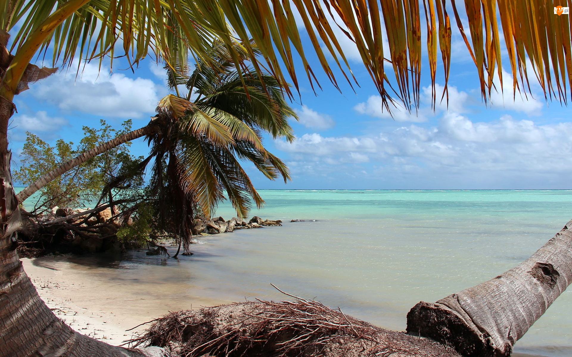 Palmy, Morze, Ocean, Pochylone