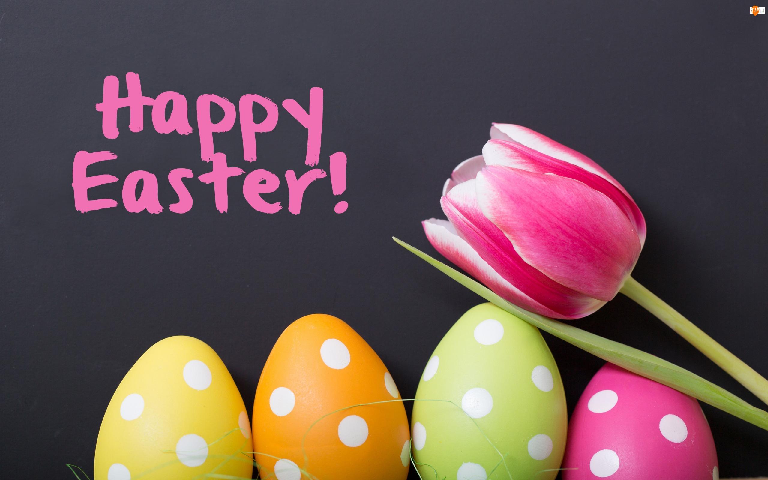 Jajka, Wielkanoc, Różowy, Kwiat, Pisanki, Tulipan