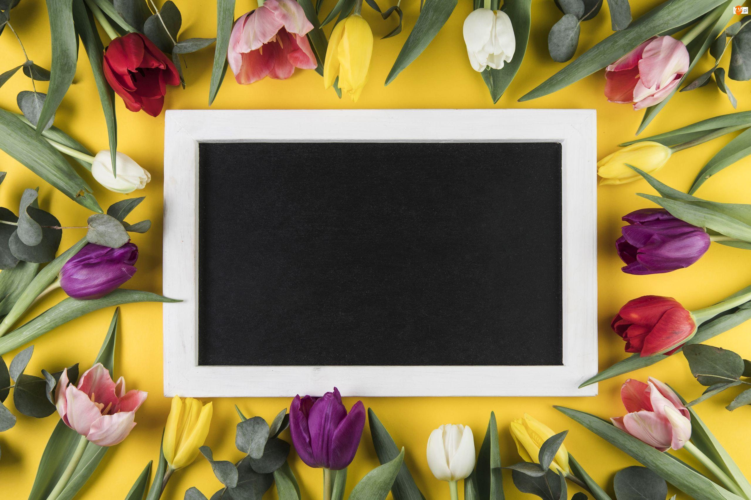 Różnokolorowe, Kwiaty, Tabliczka, Tło, Tulipany, Żółte