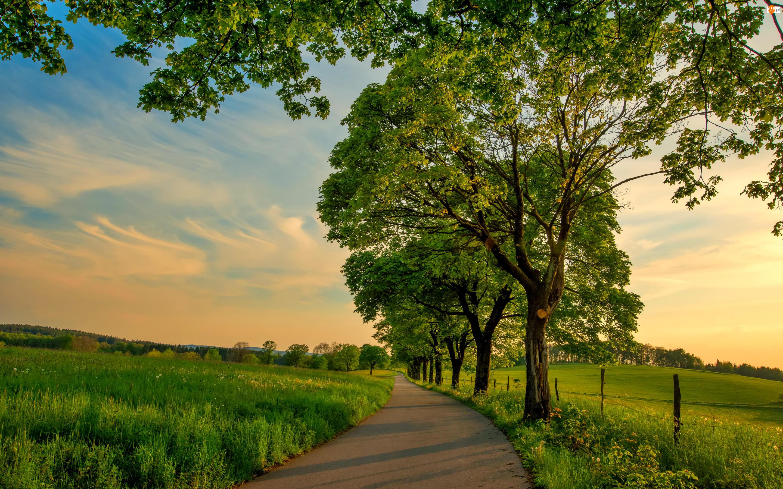 Drzewa, Łąki, Droga