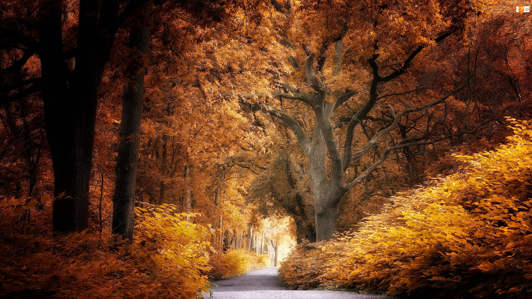 Żółto-brązowe, Droga, Las, Jesień, Drzewa