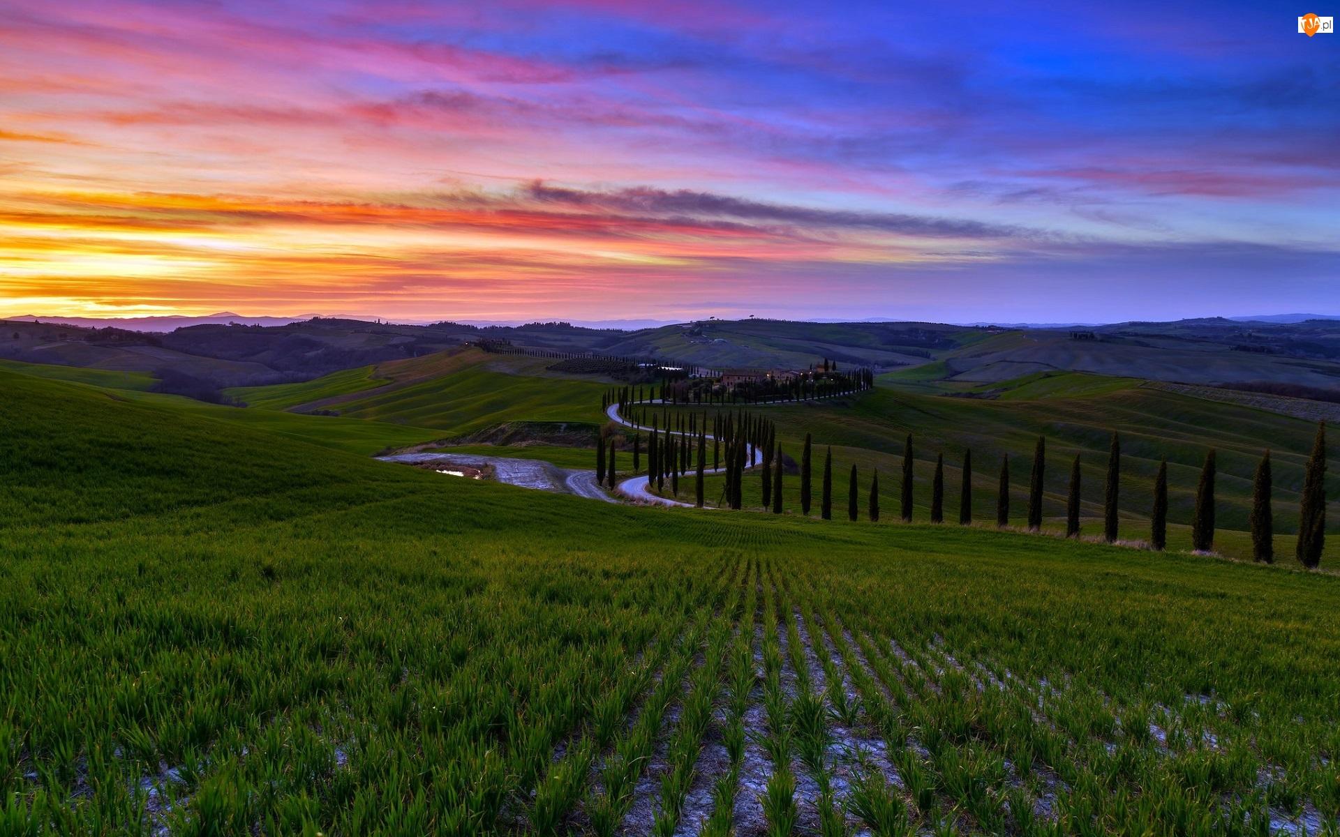 Domy, Włochy, Drzewa, Droga, Toskania, Cyprysy, Zachód słońca, Wzgórza