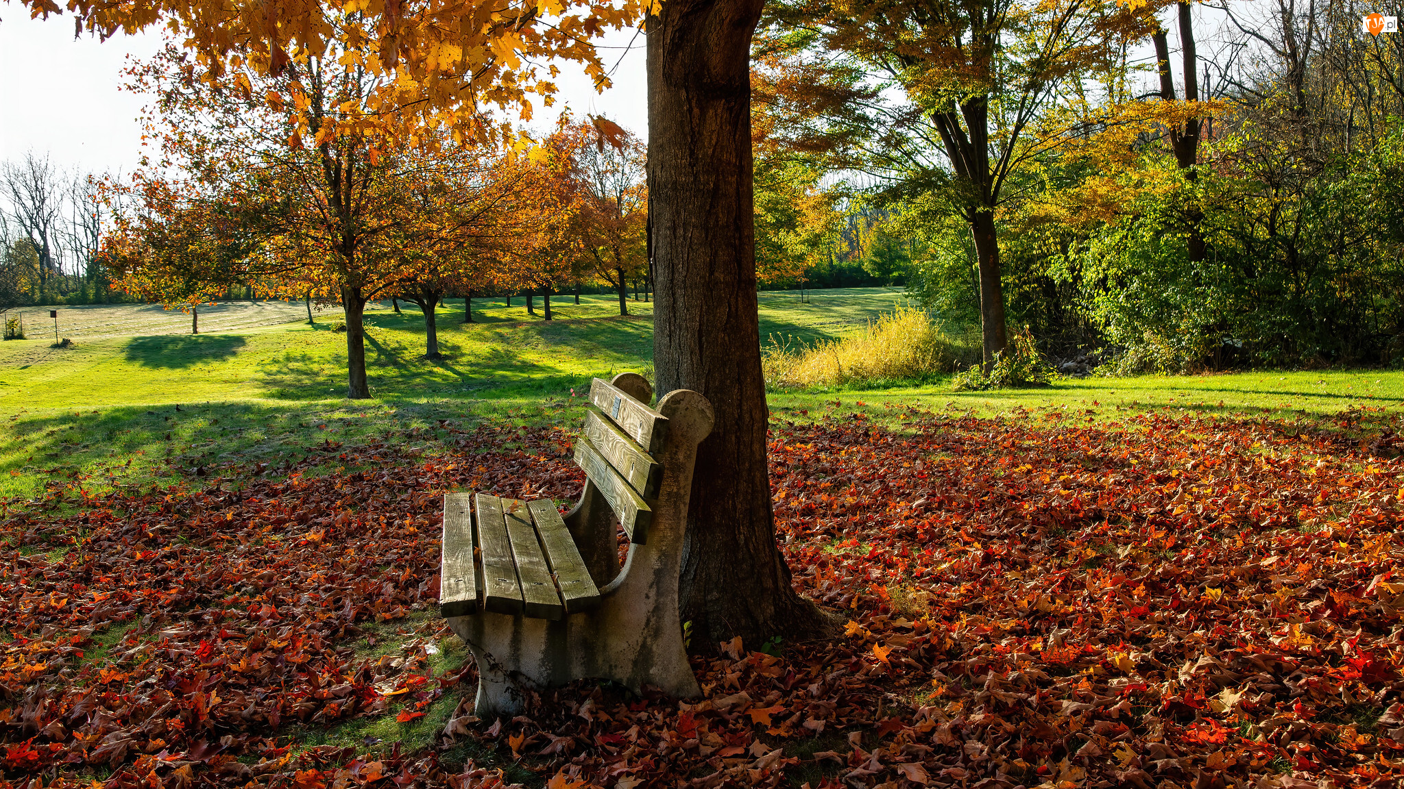 Jesień, Park, Liście, Drzewa, Opadłe, Ławka