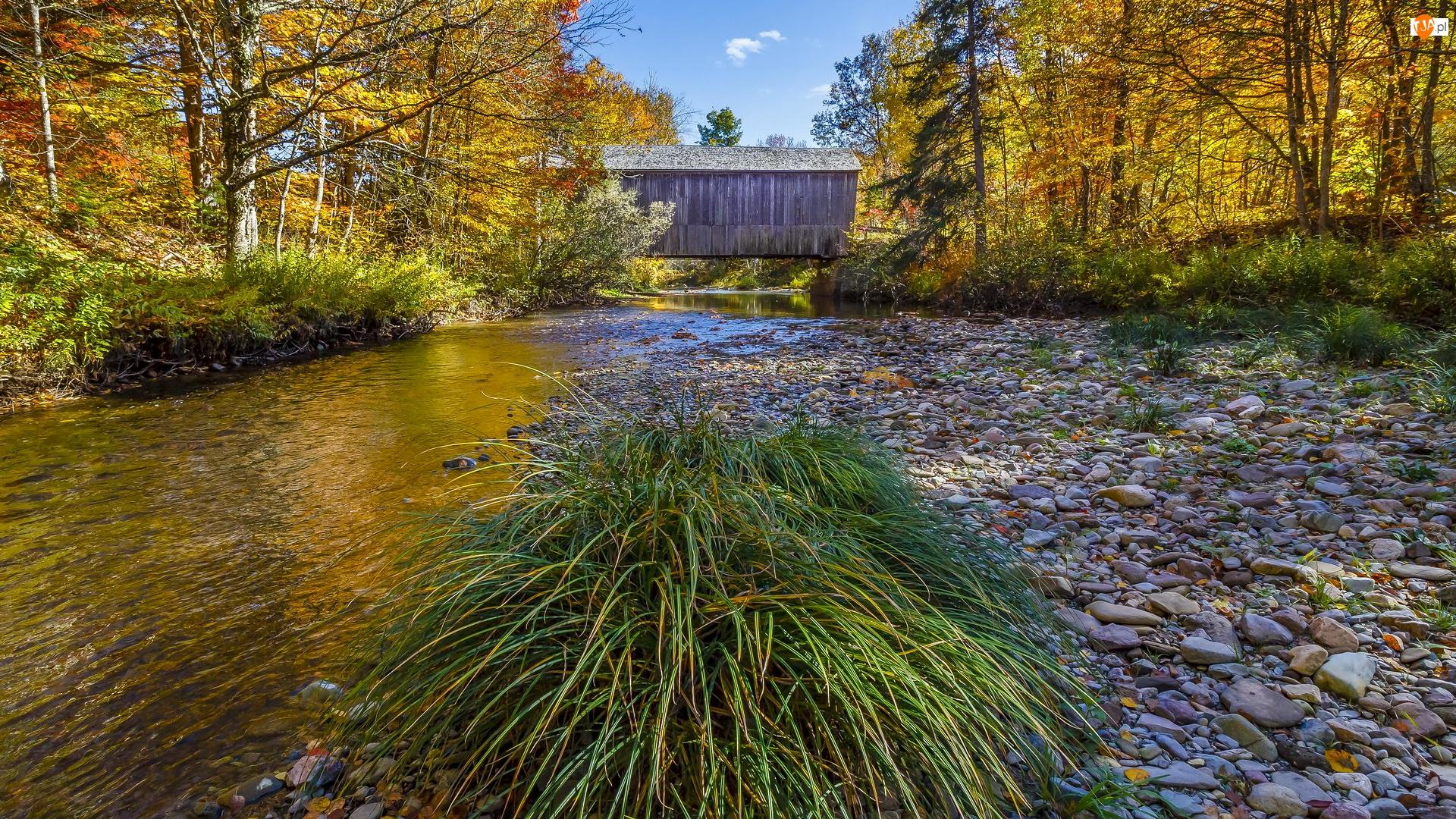 Drewniany, Rzeka, Kępka, Zakryty, Jesień, Trawy, Most, Drzewa