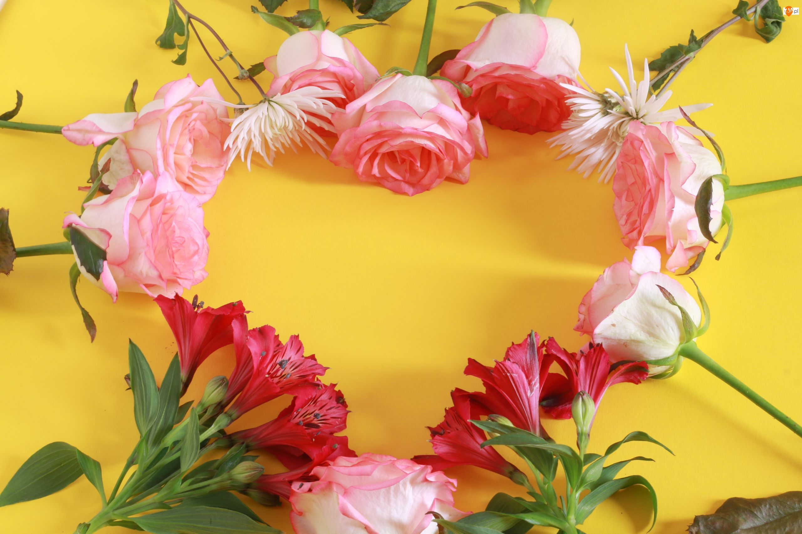 Alstremeria, Żółte tło, Róże, Kwiaty, Serce