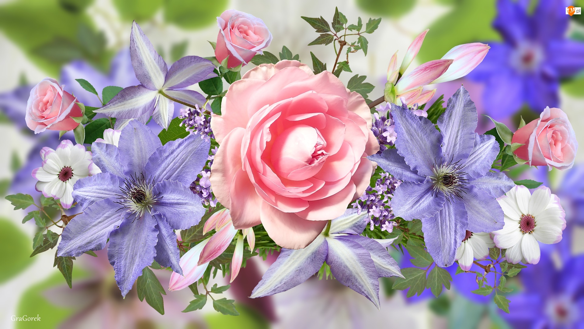 Grafika, Kwiaty, Róże, Powojnik