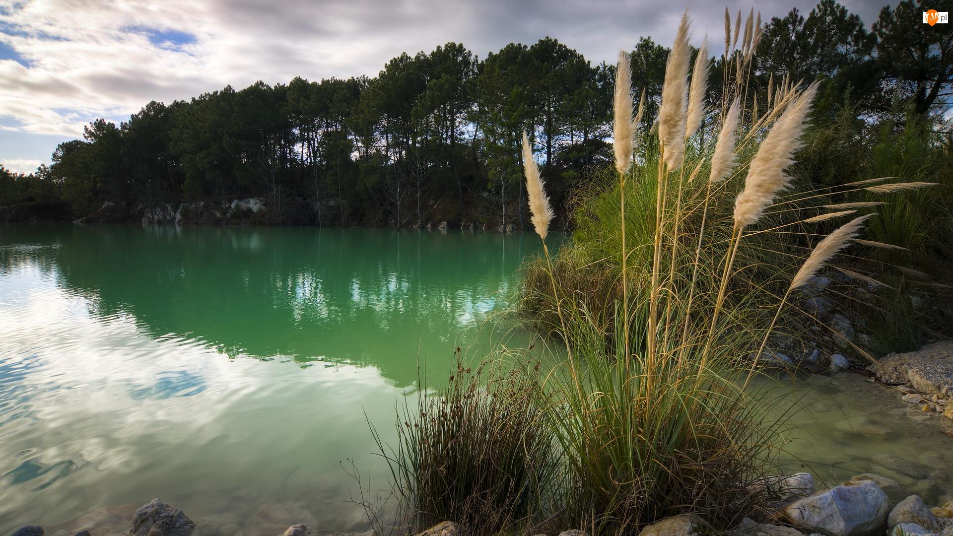 Drzewa, Trawa, Kępy, Jezioro