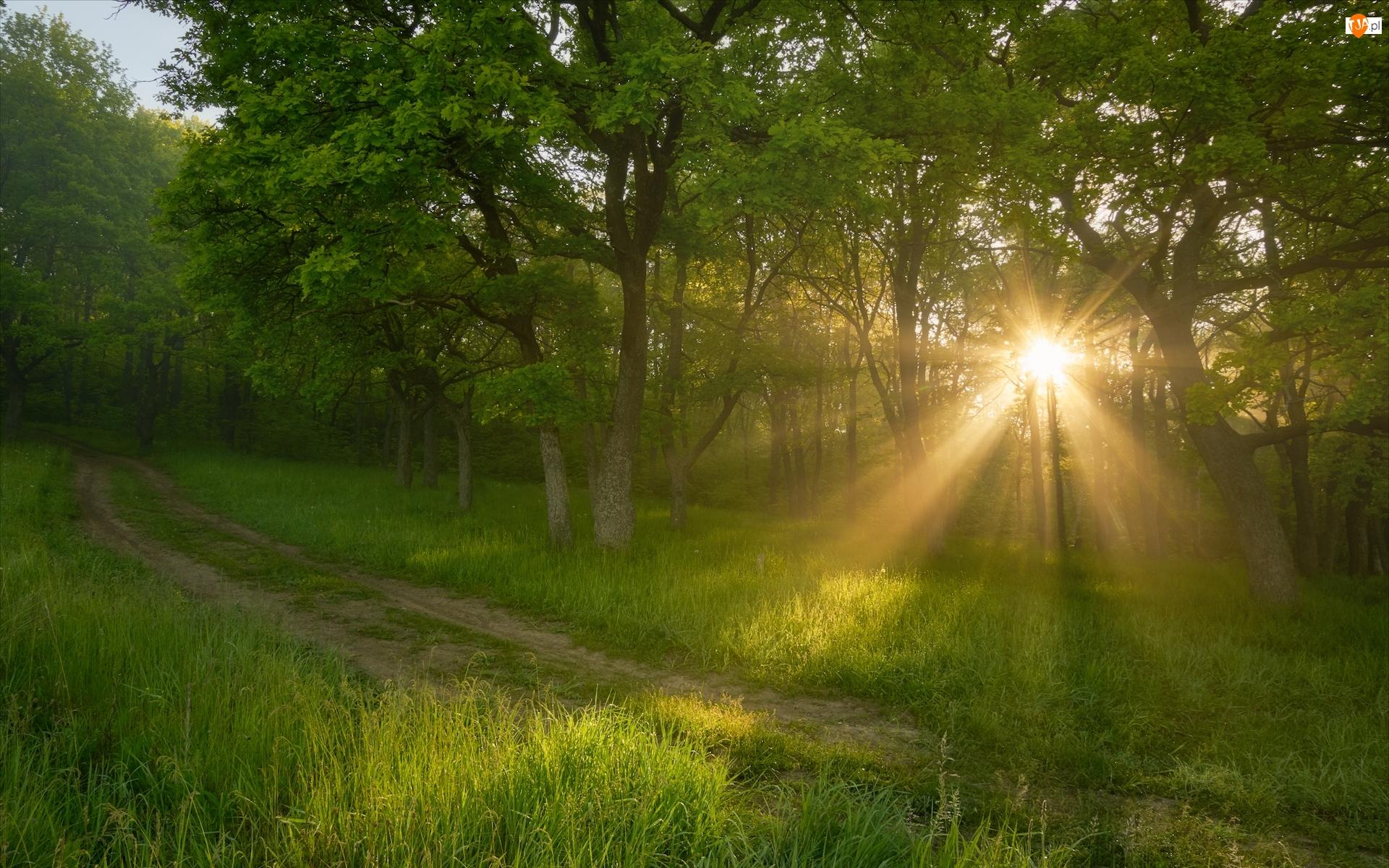 Droga, Promienie słońca, Drzewa, Trawa