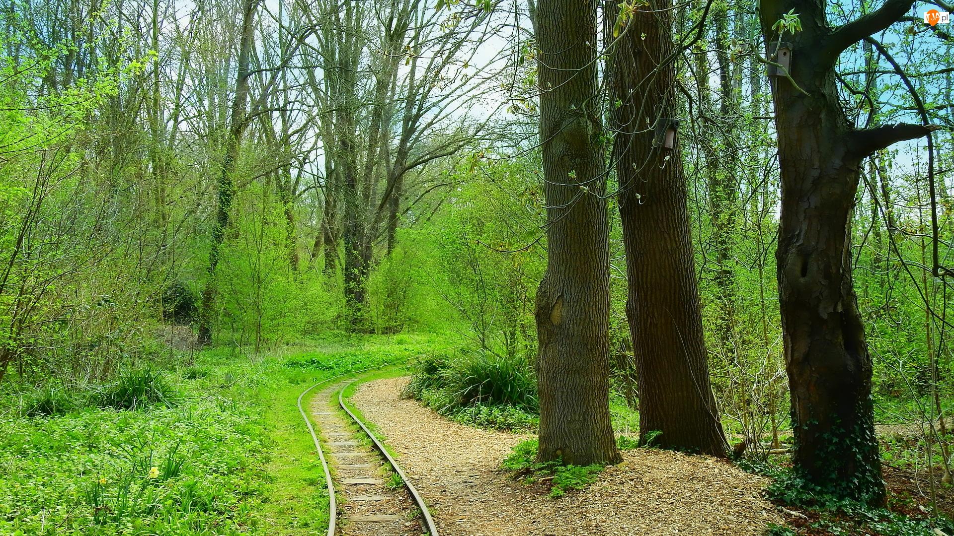 Las, Wiosna, Krzewy, Tory, Drzewa, Trawa