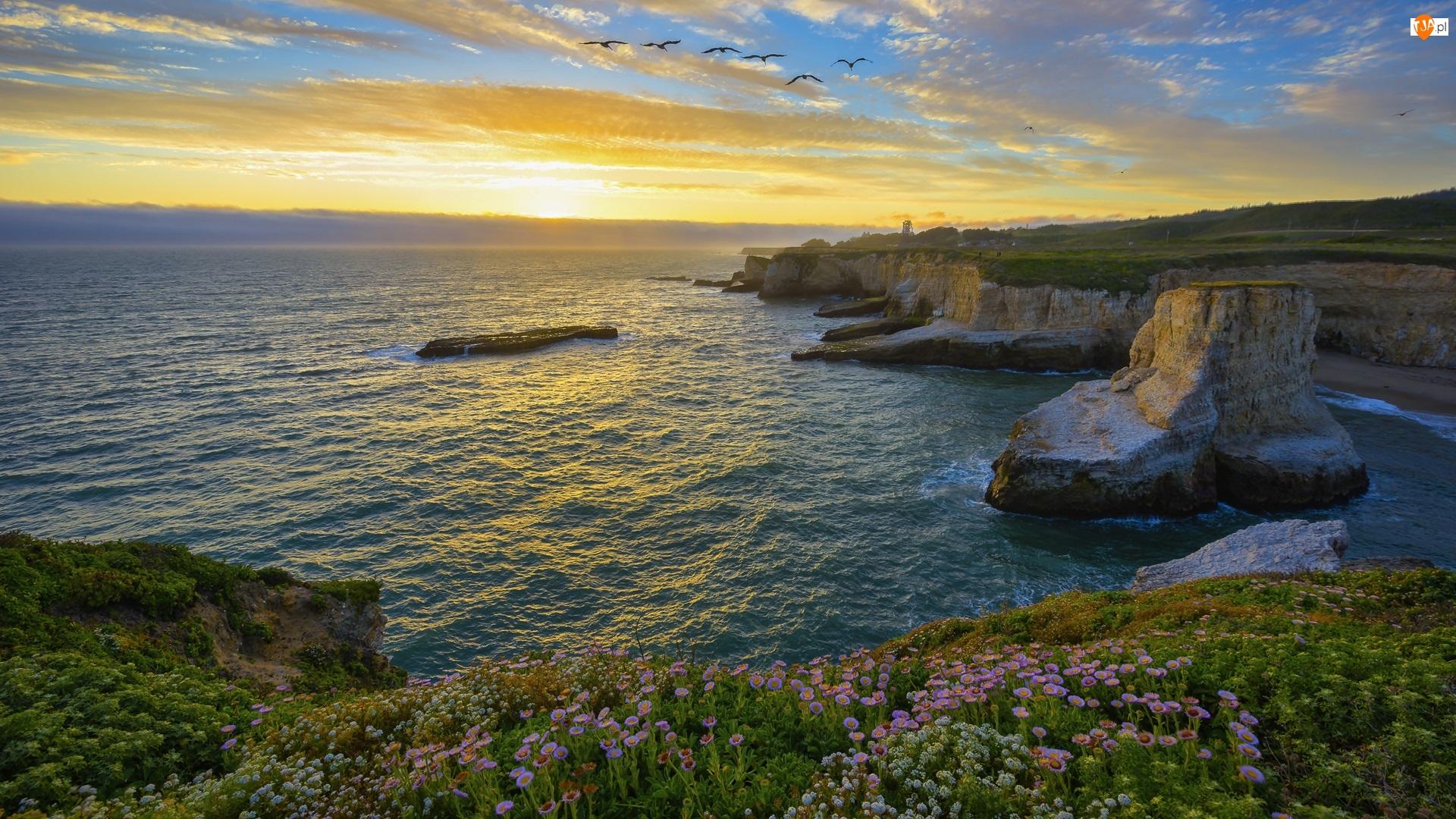 Davenport, Ocean Spokojny, Wschód słońca, Stany Zjednoczone, Hrabstwo Santa Cruz, Morze, Klify, Ptaki, Wybrzeże, Skały, Kwiaty, Kalifornia
