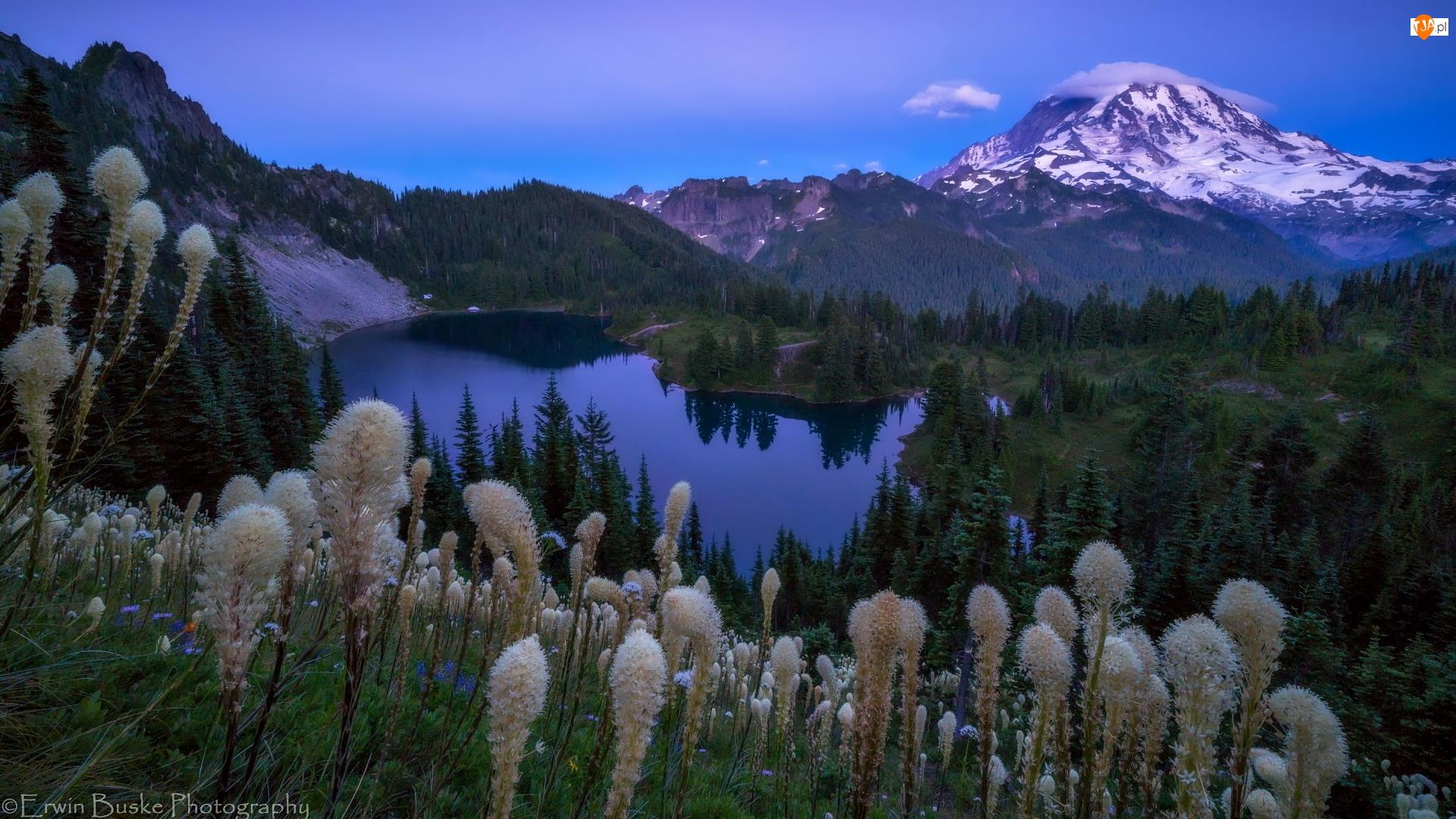 Góry, Drzewa, Wieczór, Jezioro, Rośliny, Stan Waszyngton, Stratowulkan Mount Rainier, Park Narodowy Mount Rainier, Zmierzch, Miądrzyga, Stany Zjednoczone