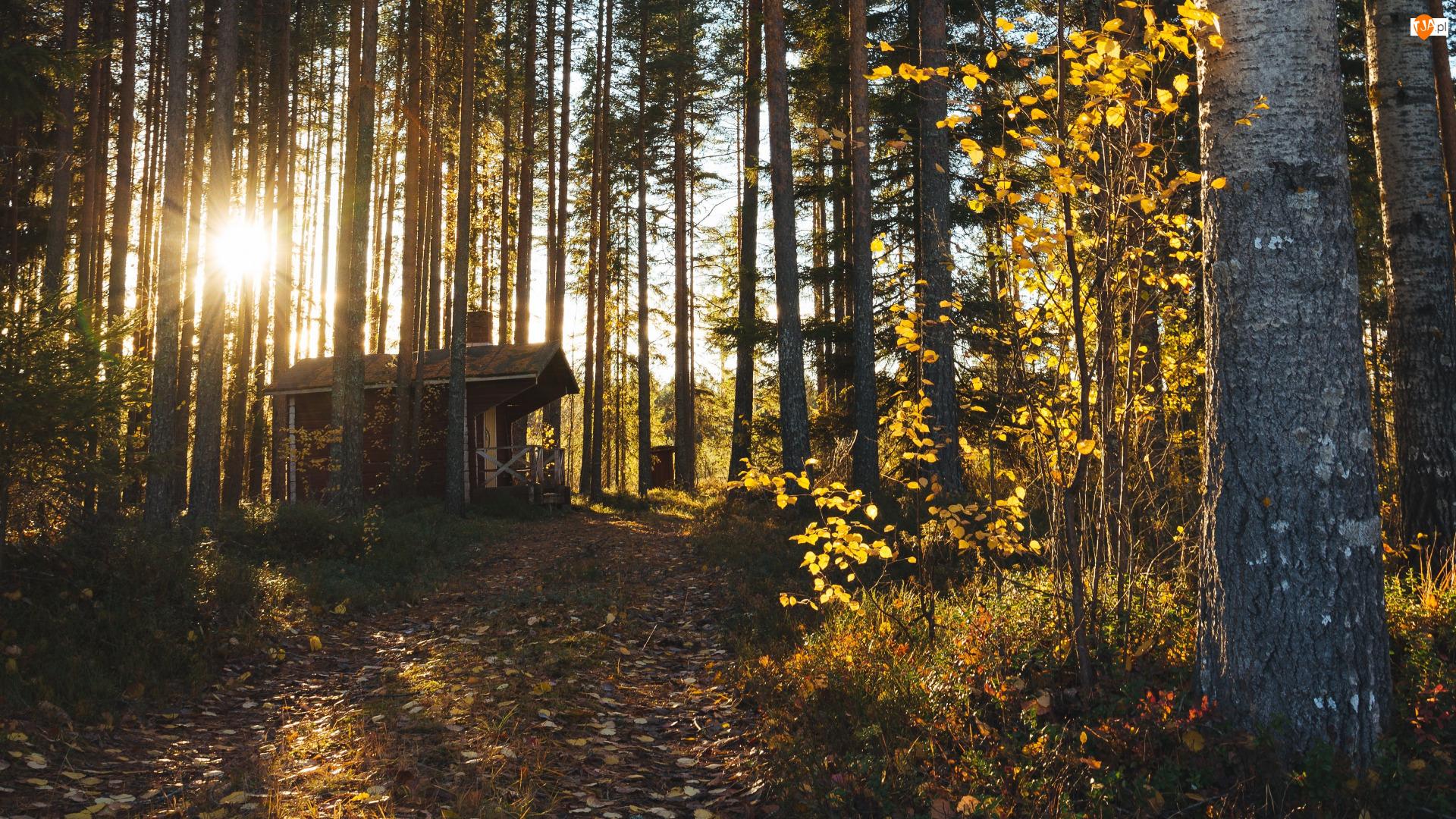 Las, Dom, Zachód słońca, Promienie słońca, Drzewa, Jesień