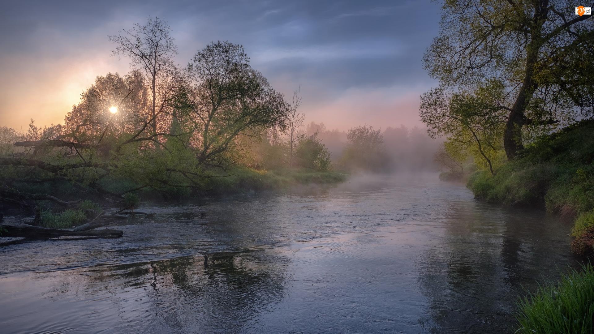 Wschód słońca, Mgła, Rosja, Wiosna, Obwód moskiewski, Drzewa, Rzeka Istra
