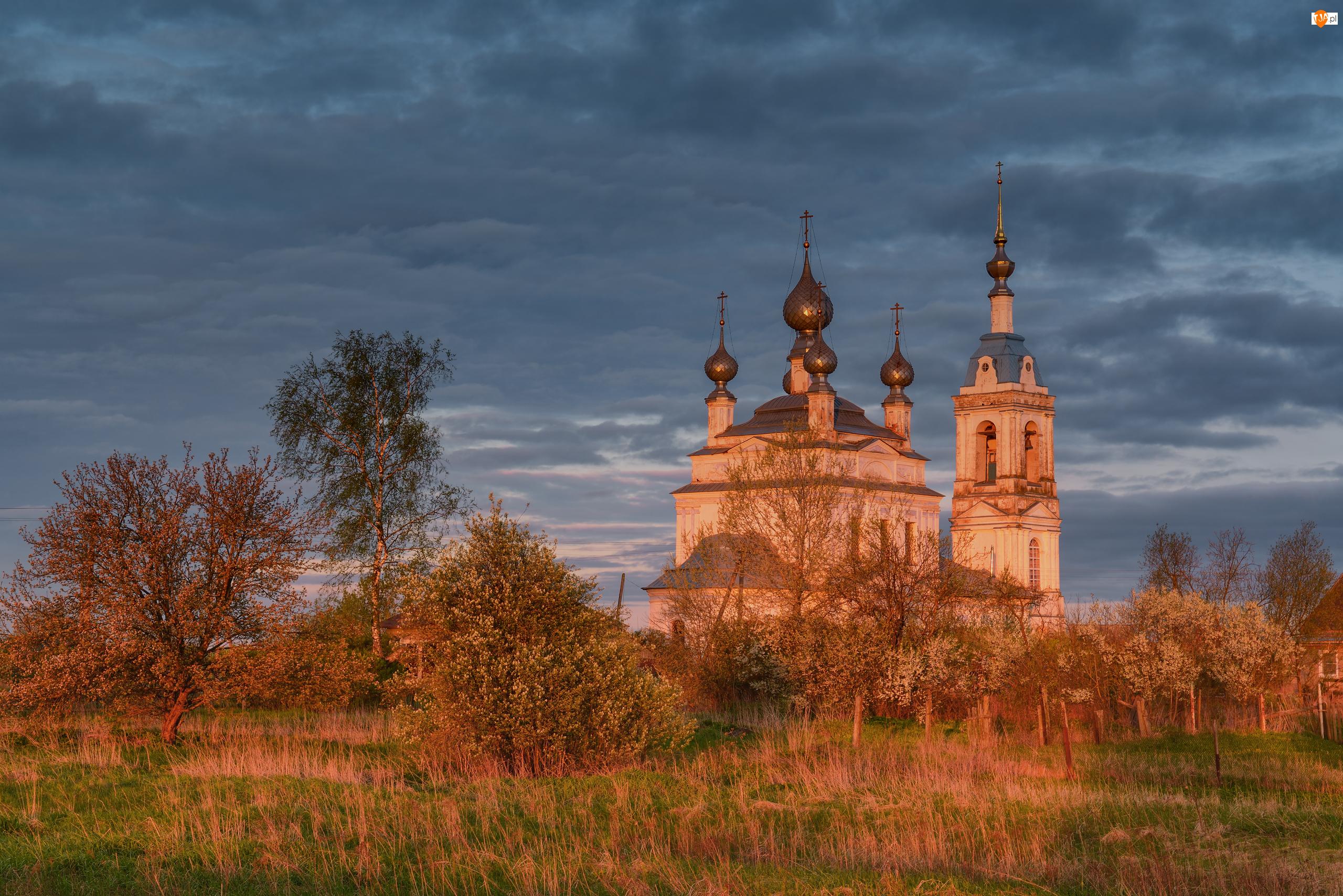 Drzewa, Rośliny, Rosja, Cerkiew, Obwód jarosławski, Savinskoye, Chmury