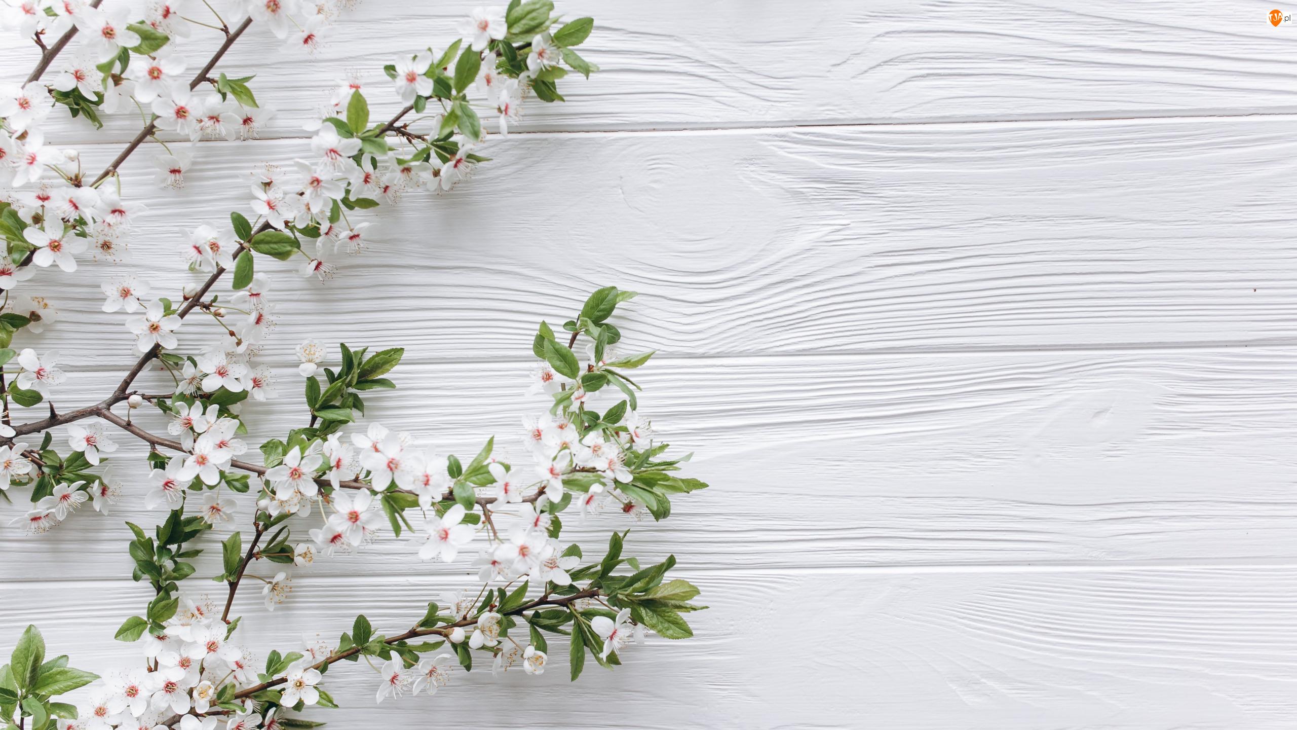 Gałązki, Drzewo owocowe, Deski, Kwiaty, Białe, Kwiaty, Białe