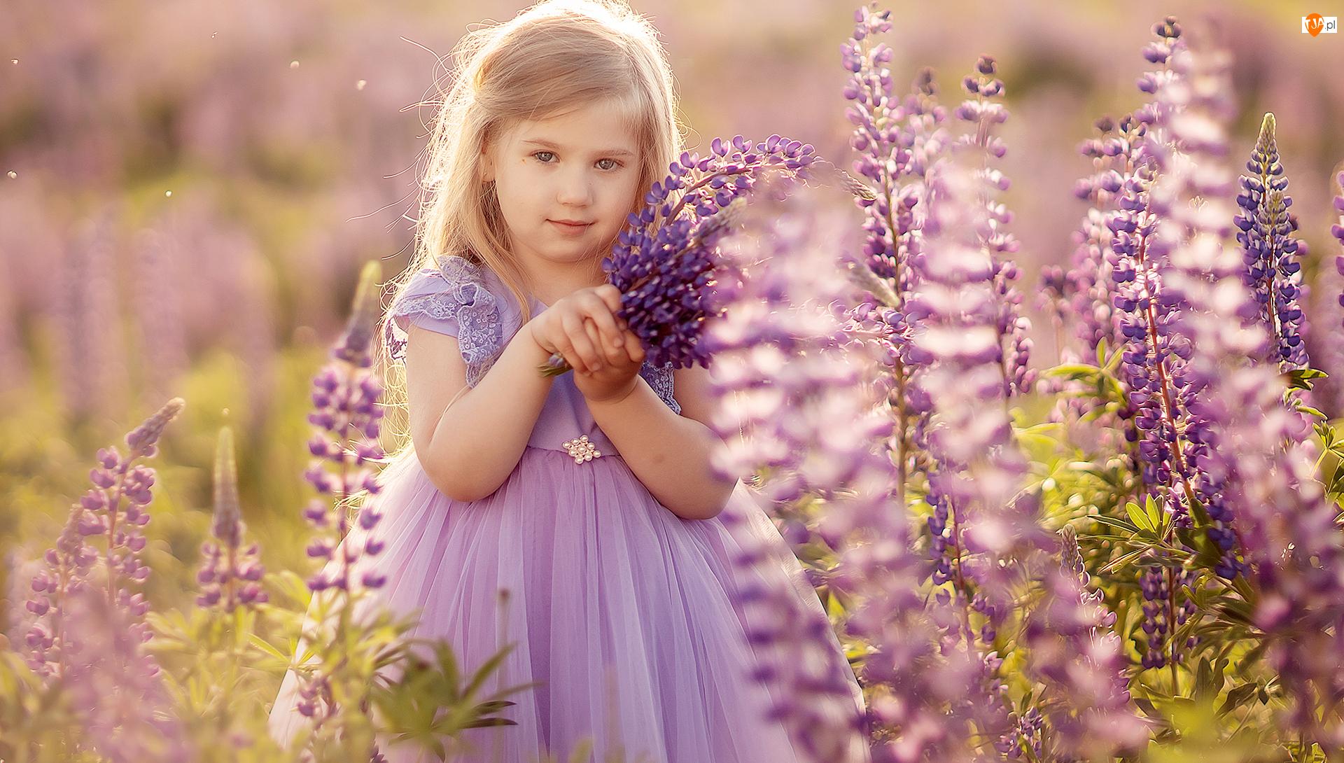 Łubin, Dziewczynka, Kwiaty