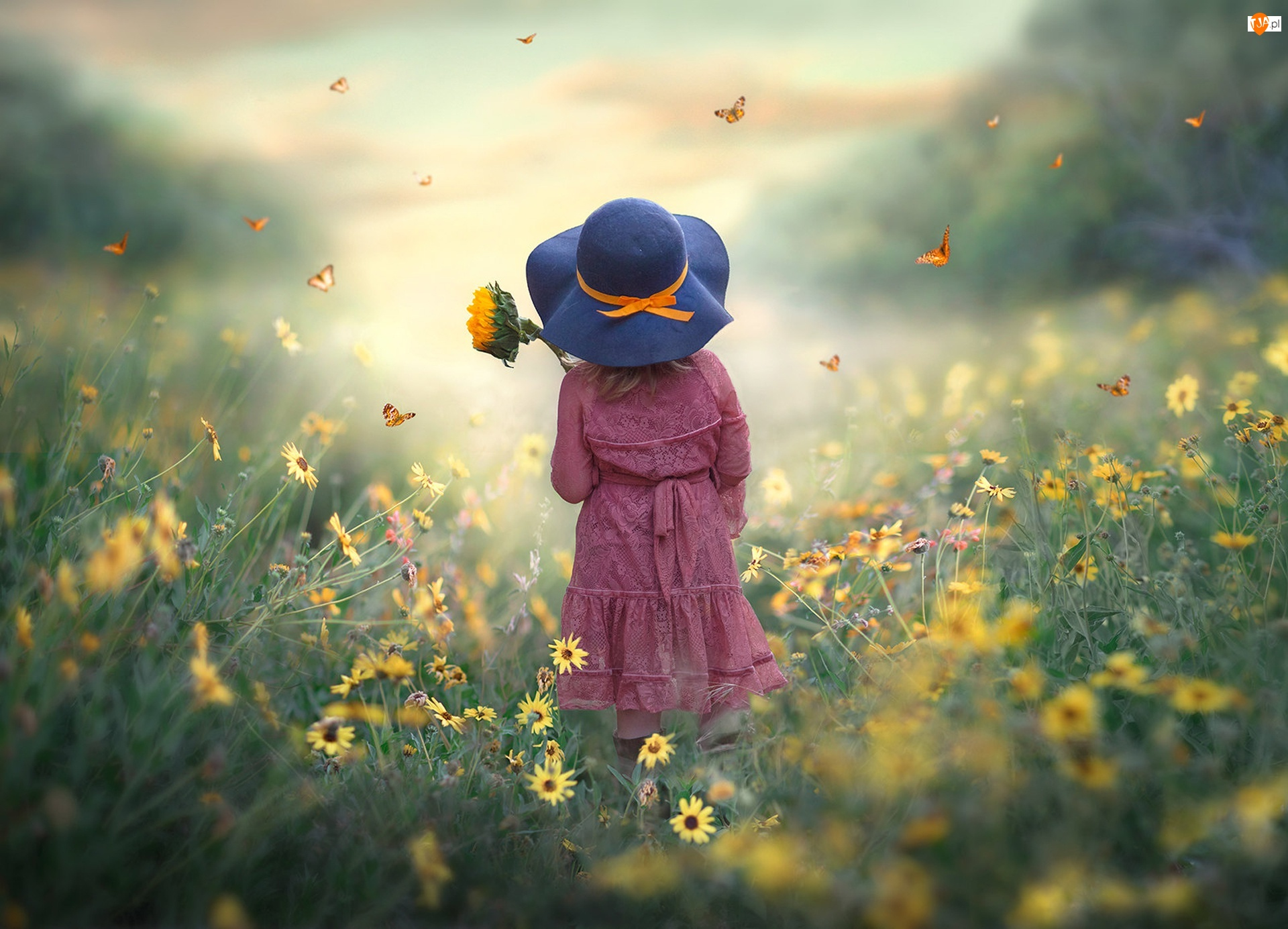 Kapelusz, Dziewczynka, Łąka, Motyle, Słonecznik, Kwiaty