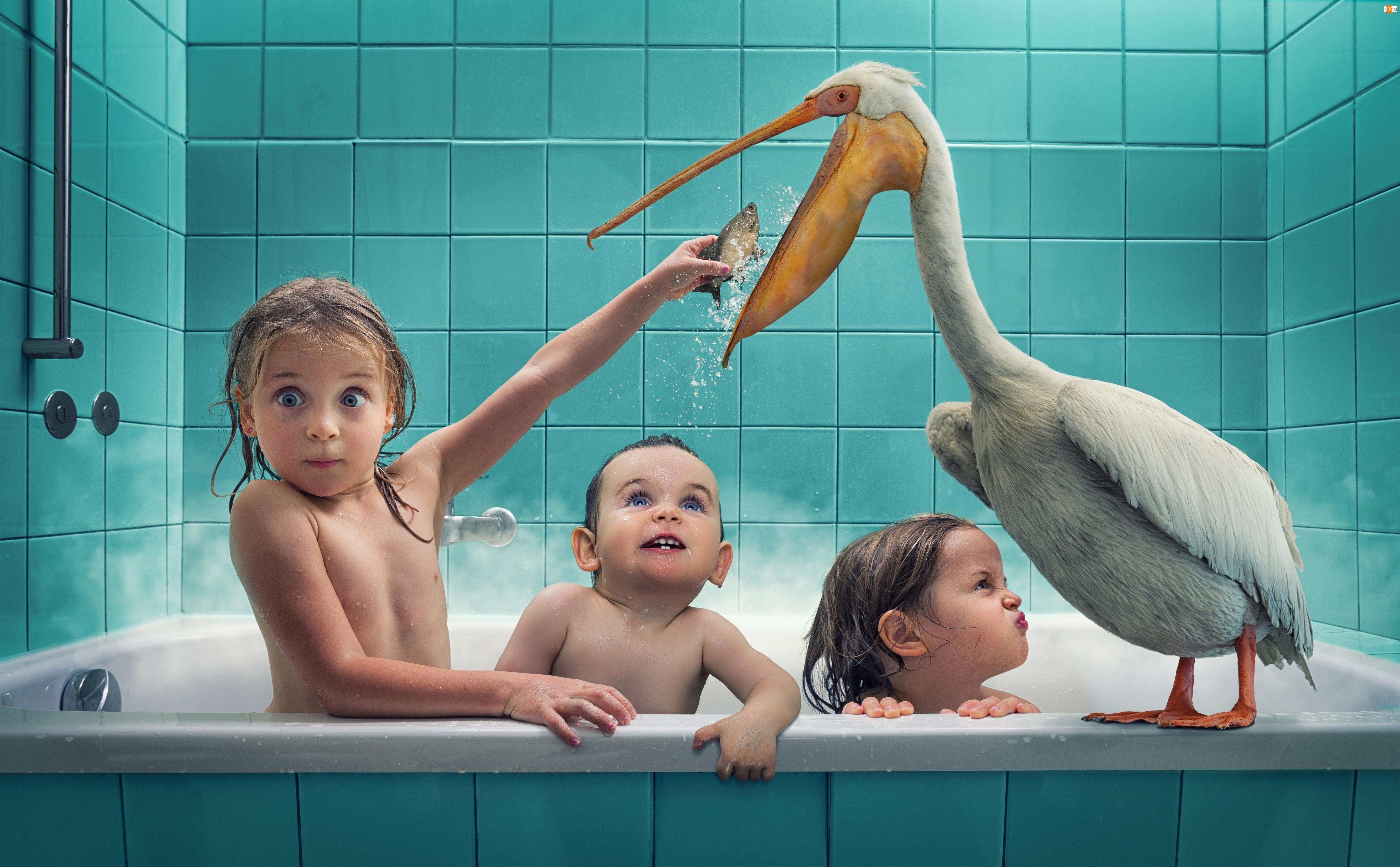 Pelikan, Zabawne, Kąpiel, Dzieci, Rybka