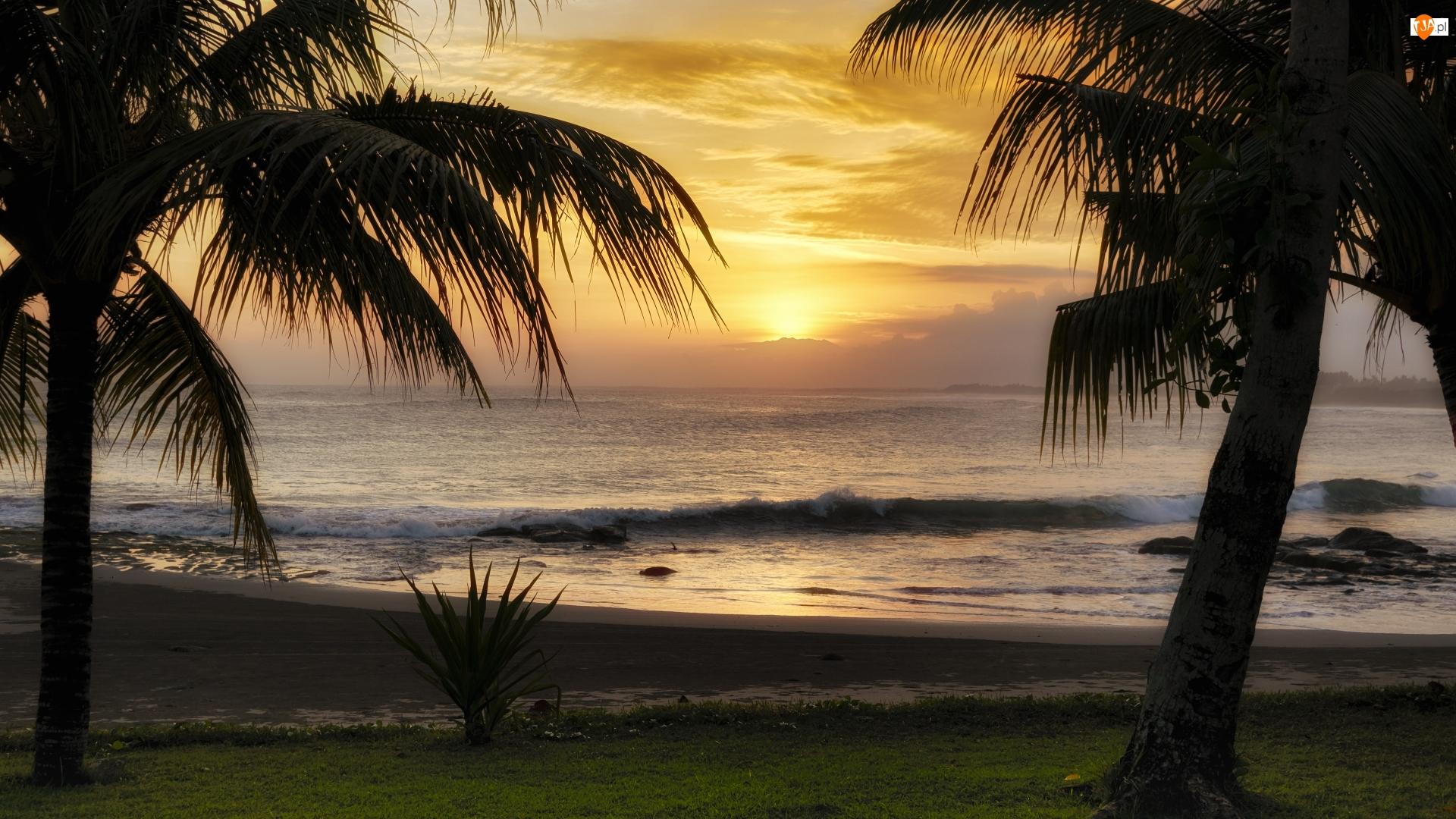 Palmy, Zachód słońca, Morze, Fala
