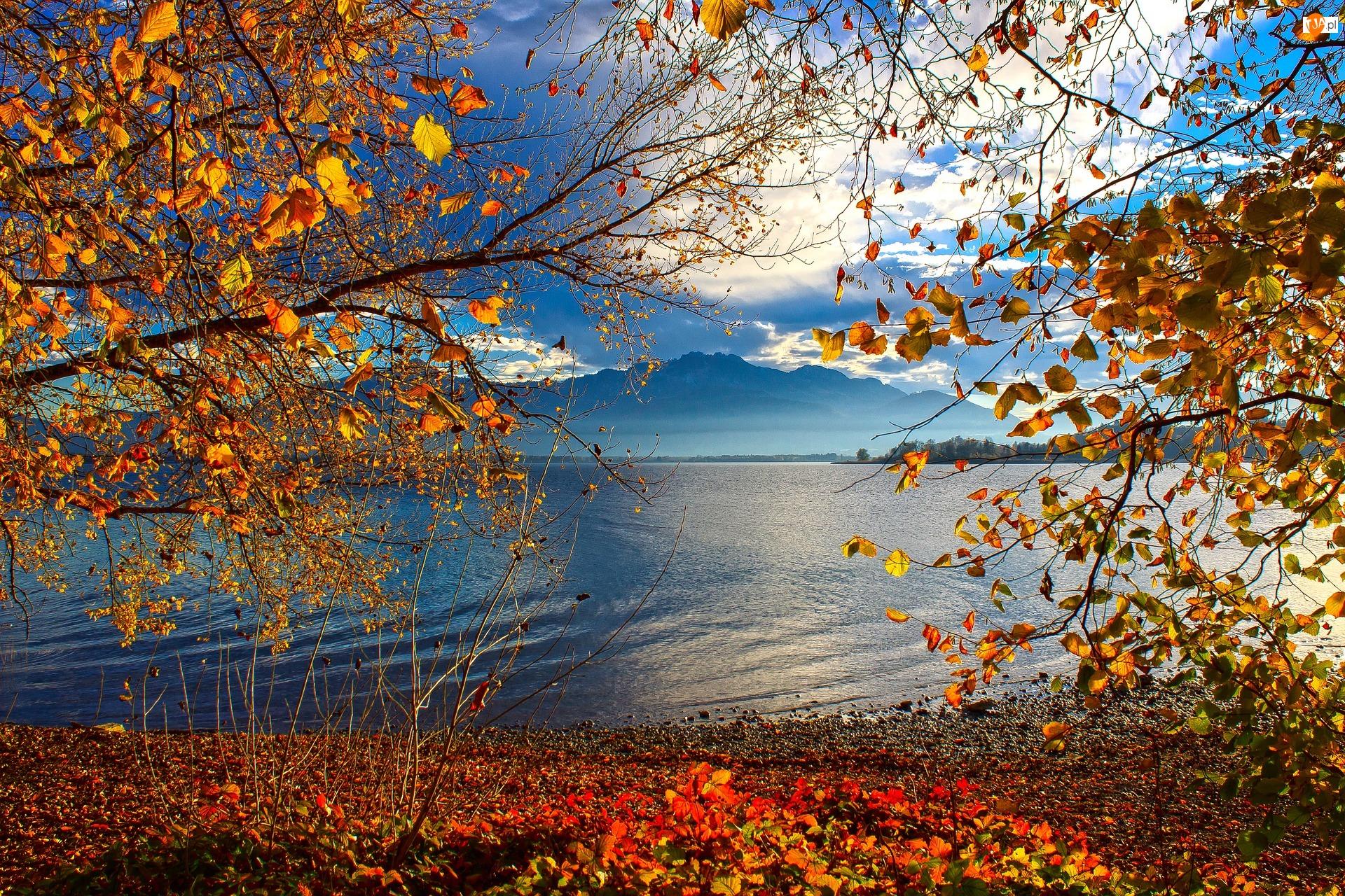 Drzewa, Jesień, Alpy Salzburskie, Niemcy, Jezioro Chiemsee, Bawaria
