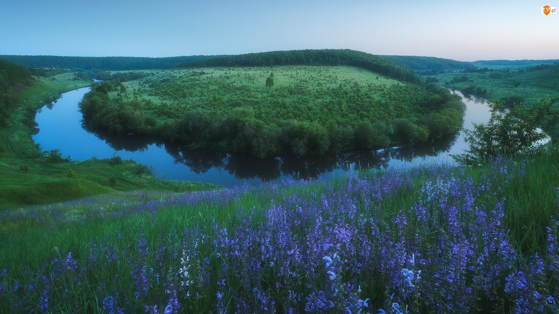 Kwiaty, Rzeka, Łąka, Obwód tulski, Krasivaya Mecha, Fioletowe, Rosja, Meander