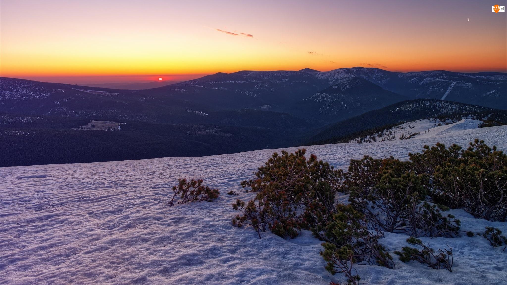 Góry, Karkonosze, Iglaki, Wschód słońca, Krzewy, Zima, Śnieg