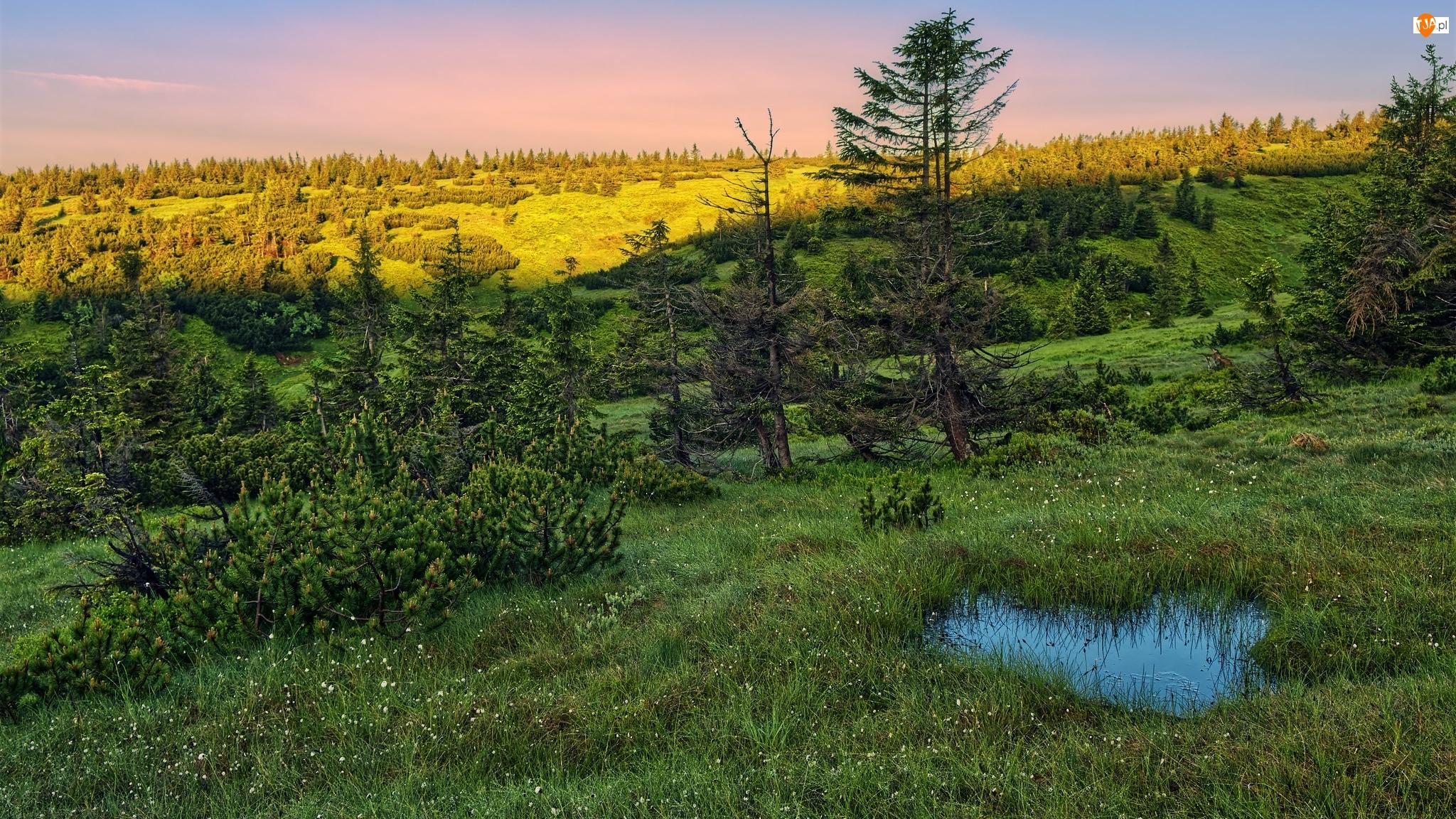 Krzewy, Kałuża, Drzewa, Karkonosze, Trawa