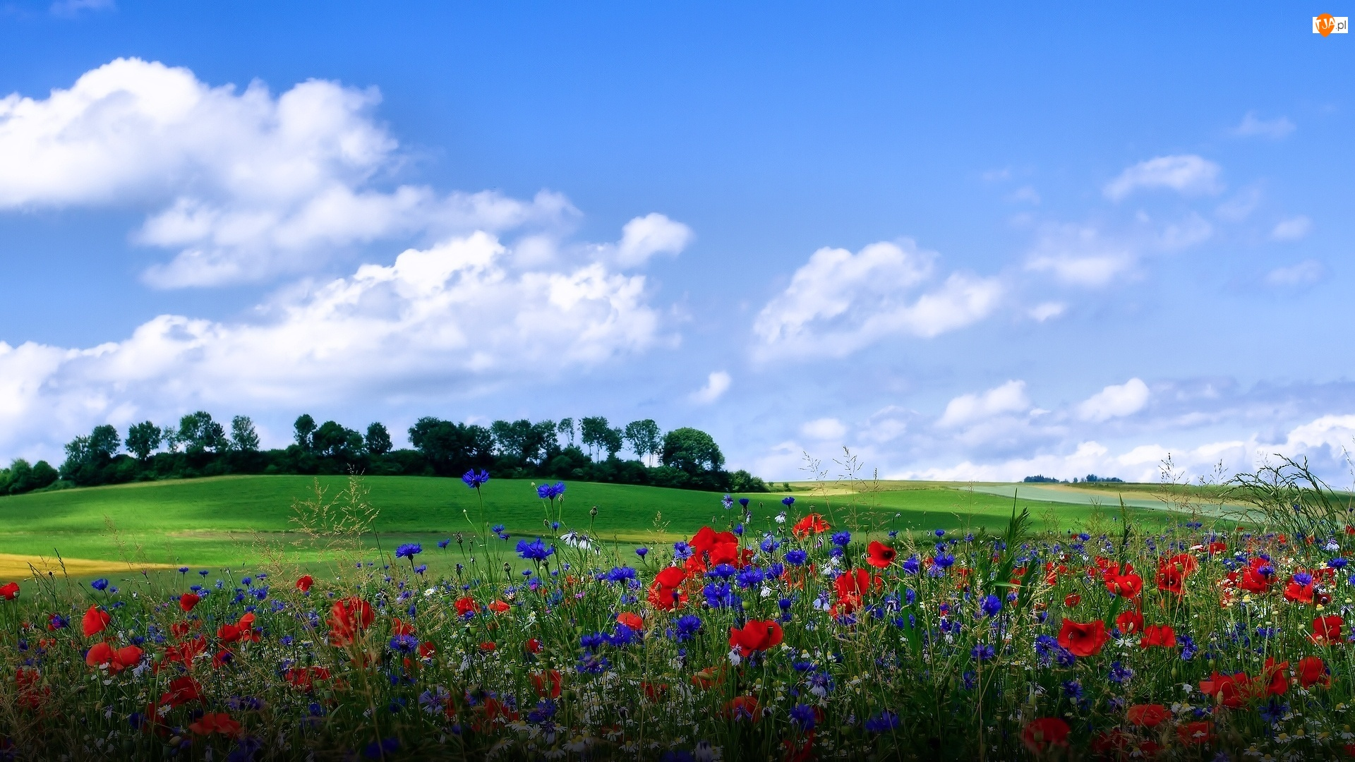 Drzewa, Łąka, Chabry, Niebo, Kwiaty, Wzgórze, Chmury, Maki