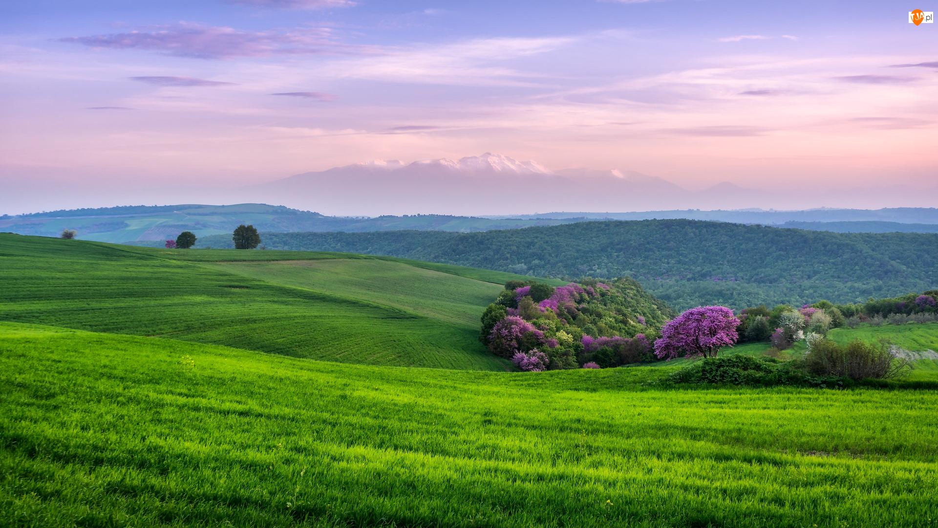 Drzewa, Szczyty, Pidna Kolindros, Góry, Wzgórza, Macedonia Środkowa, Pola, Zielone, Olimp, Kolorowe, Grecja