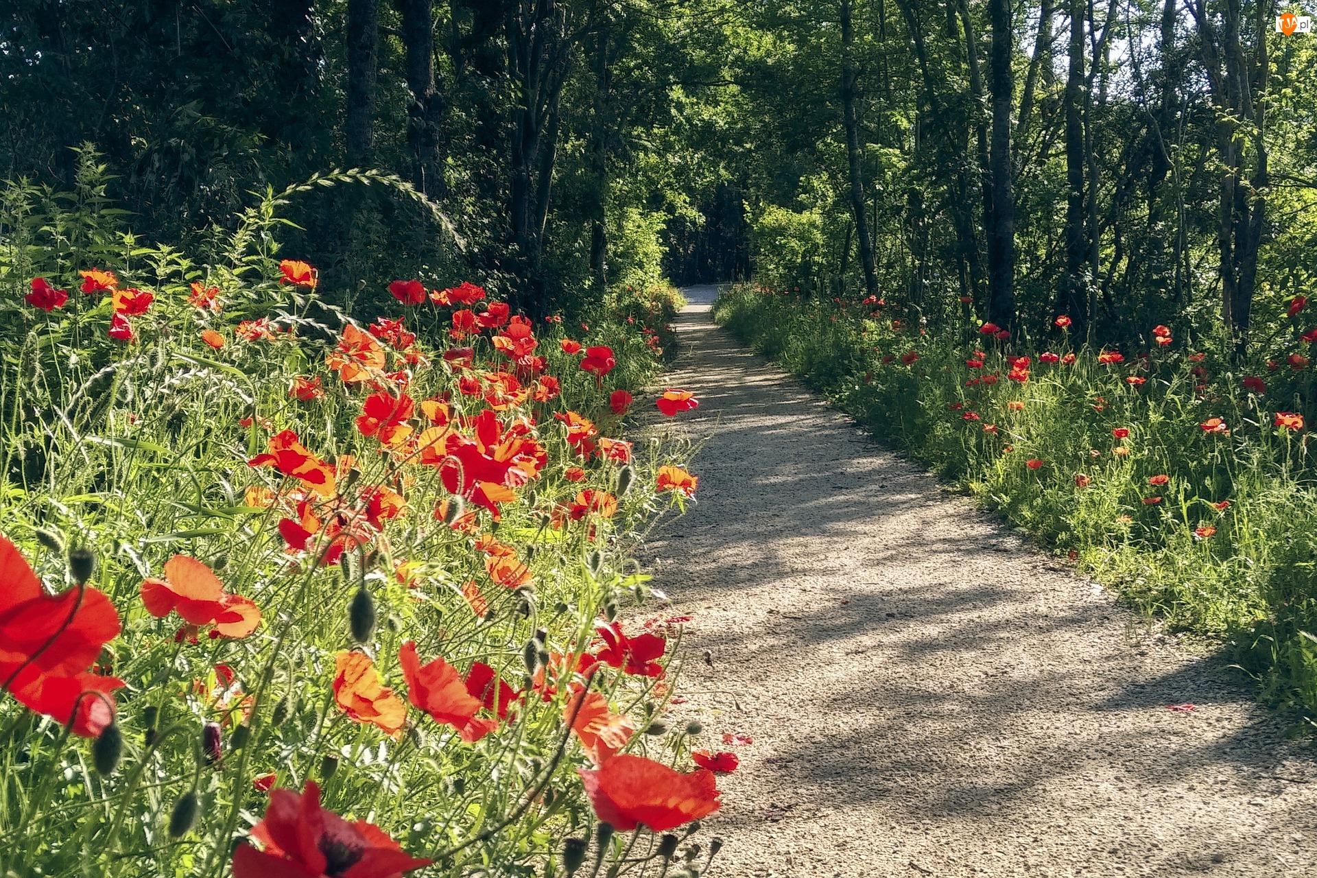 Ścieżka, Kwiaty, Maki, Droga