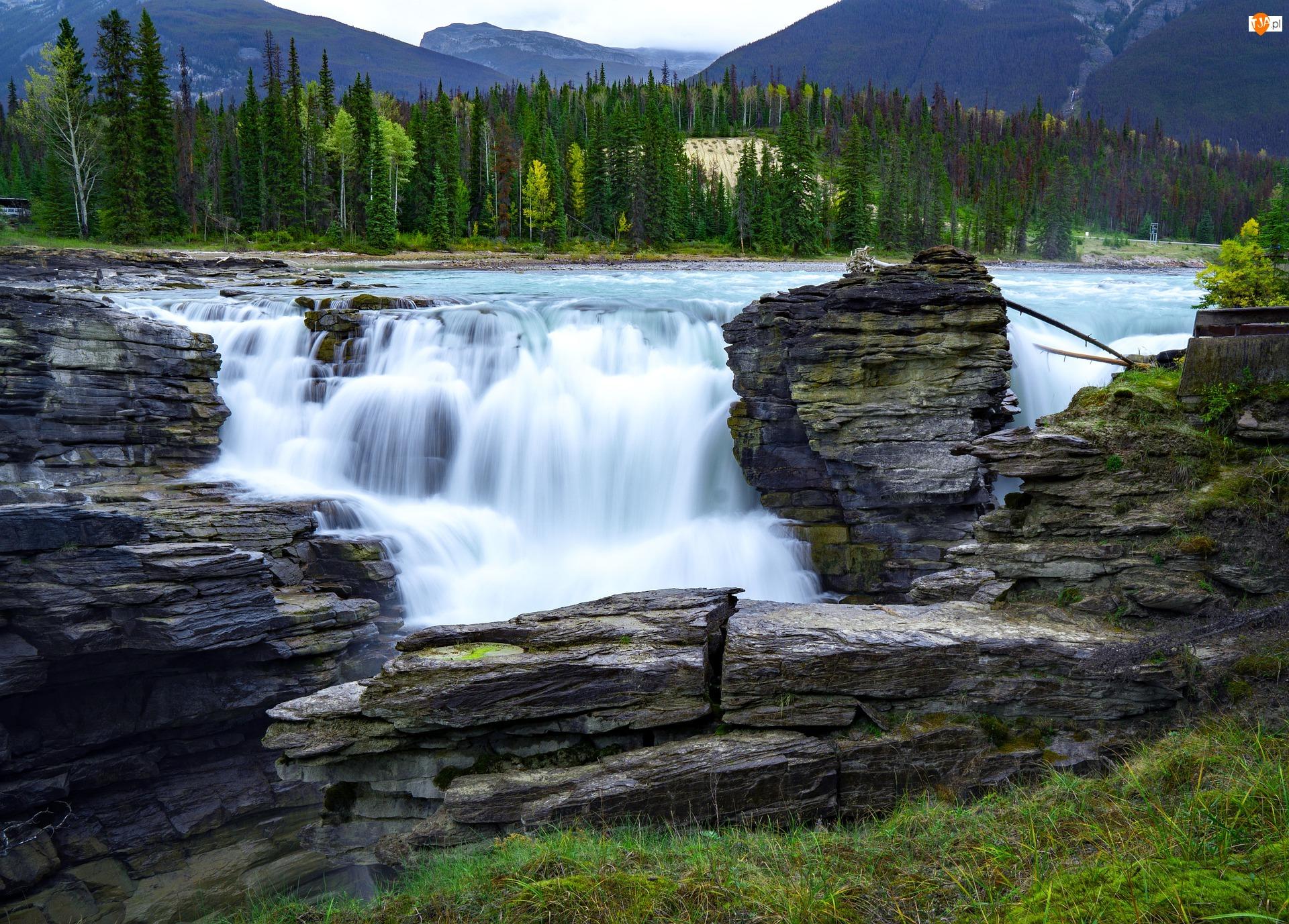Wodospad Athabasca, Rzeka Athabasca, Kanada, Park Narodowy Jasper, Prowincja Alberta, Drzewa, Skały