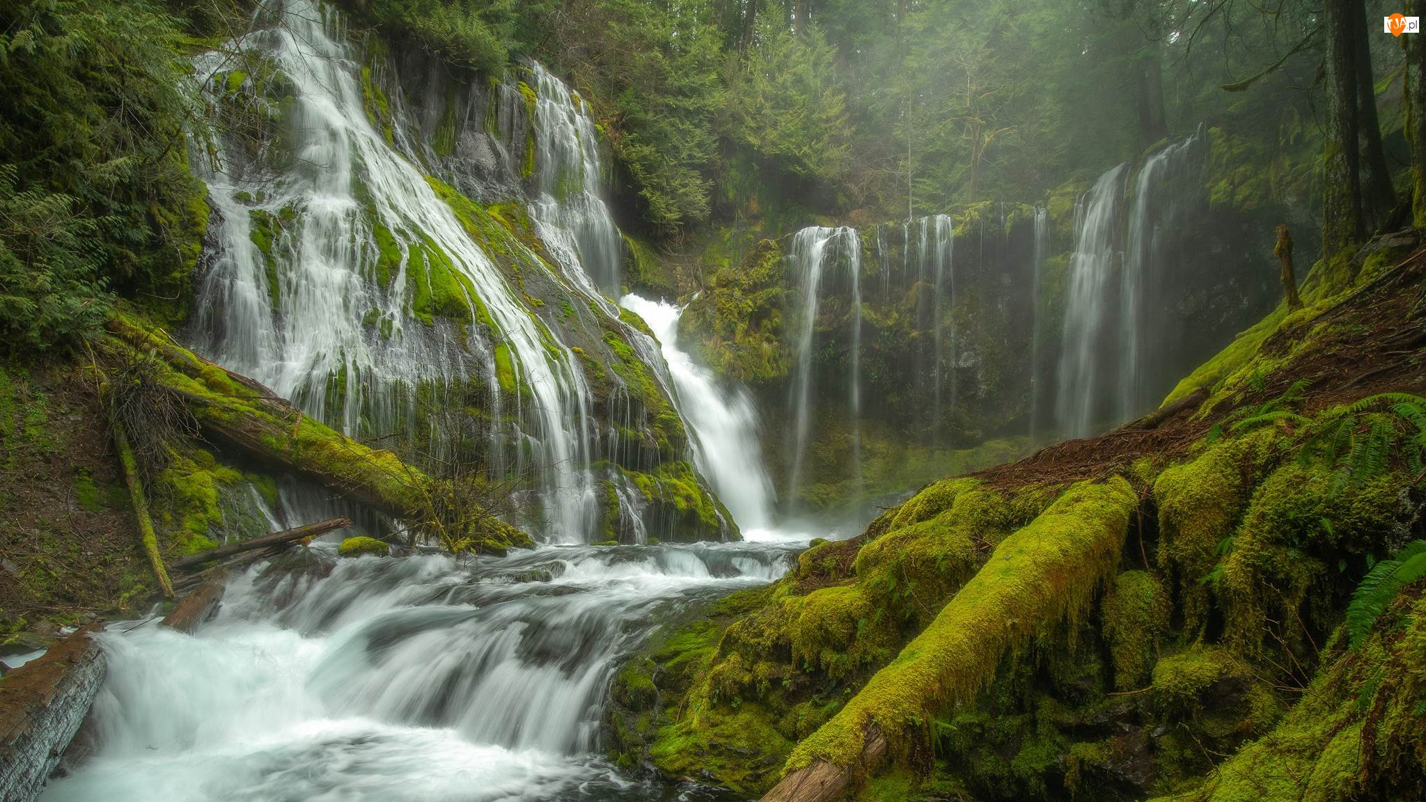 Stan Waszyngton, Miejsce chronione, Gifford Pinchot National Forest, Wodospad Panther Creek Falls, Drzewa, Las, Pnie, Omszałe, Roślinność, Stany Zjednoczone