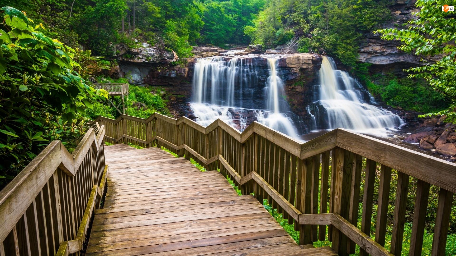 Wirginia Zachodnia, Park stanowy Blackwater Falls, Schody, Stany Zjednoczone, Drzewa, Las, Wodospad Blackwater Falls