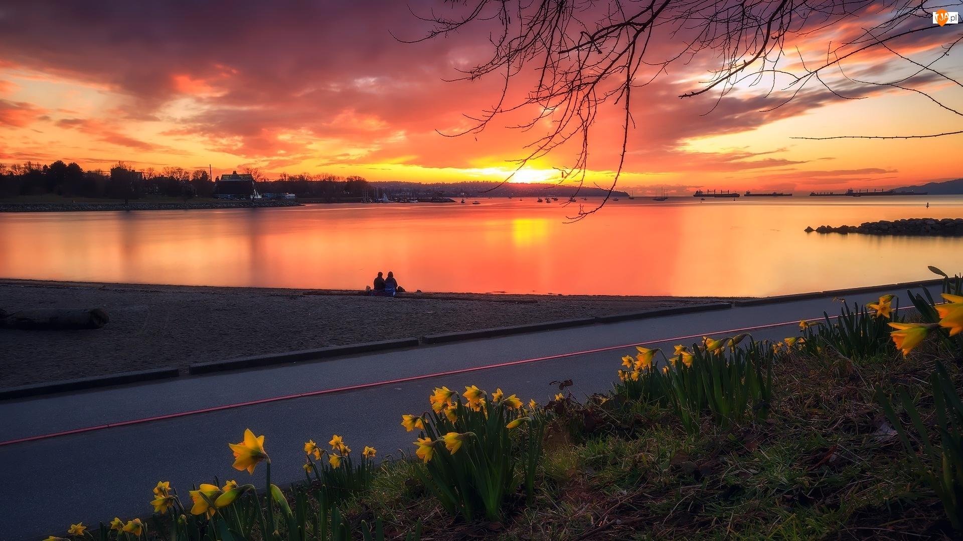 Narcyzy żonkile, Jezioro, Zachód słońca, Droga