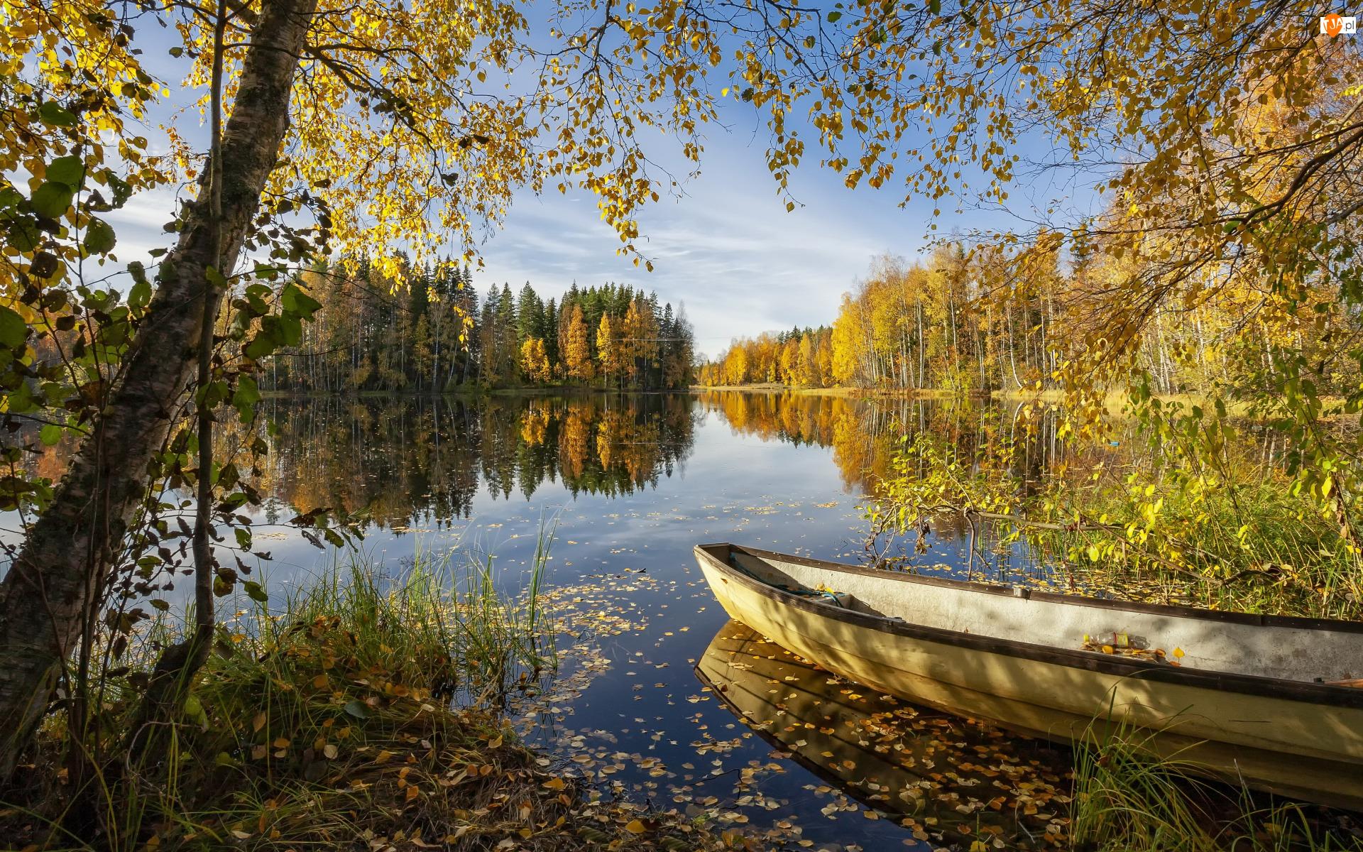 Jesień, Jezioro, Brzozy, Słoneczny, Łódka, Las, Dzień, Drzewa