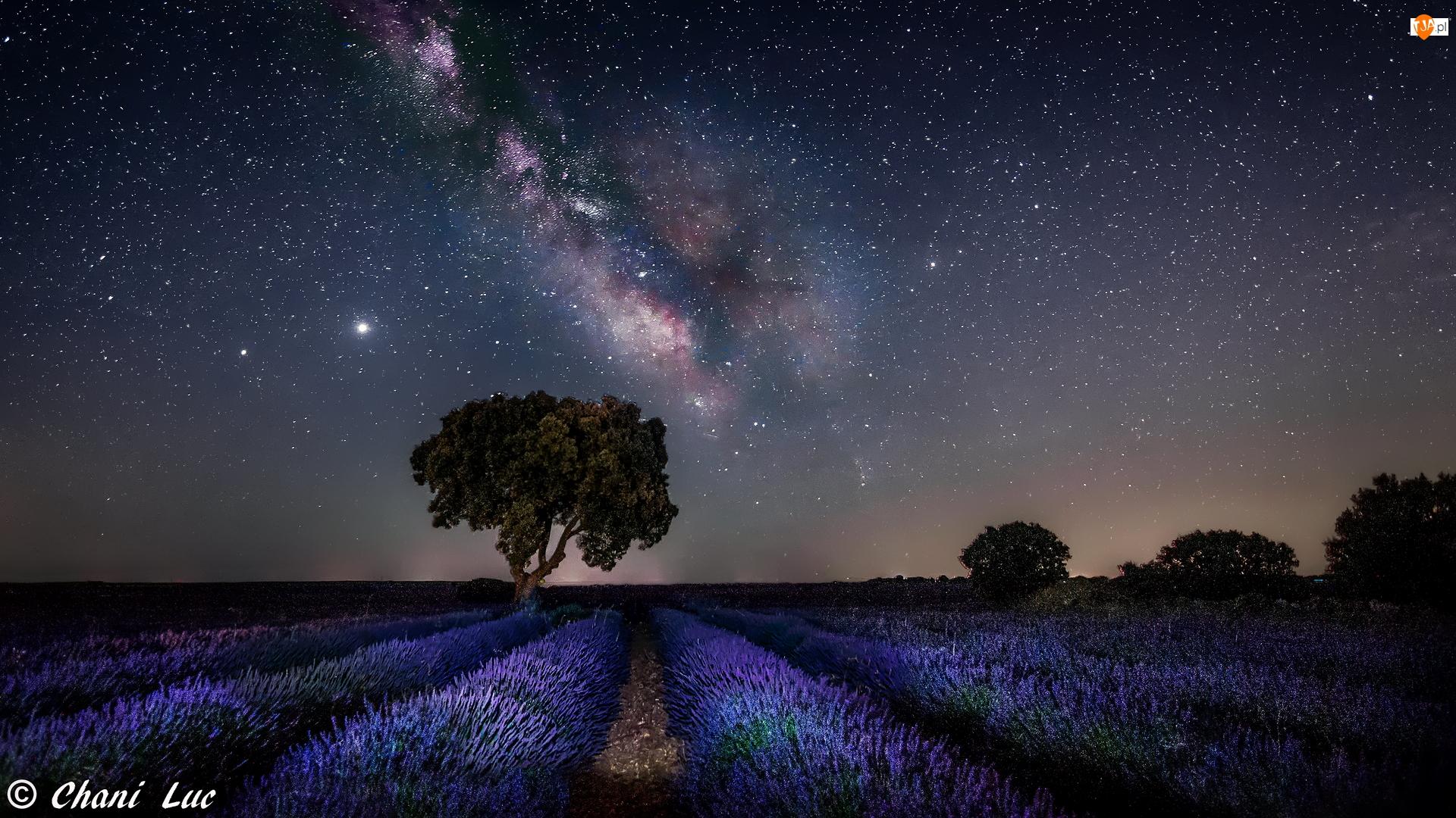 Lawenda, Pole, Noc, Droga Mleczna, Drzewo, Gwiazdy