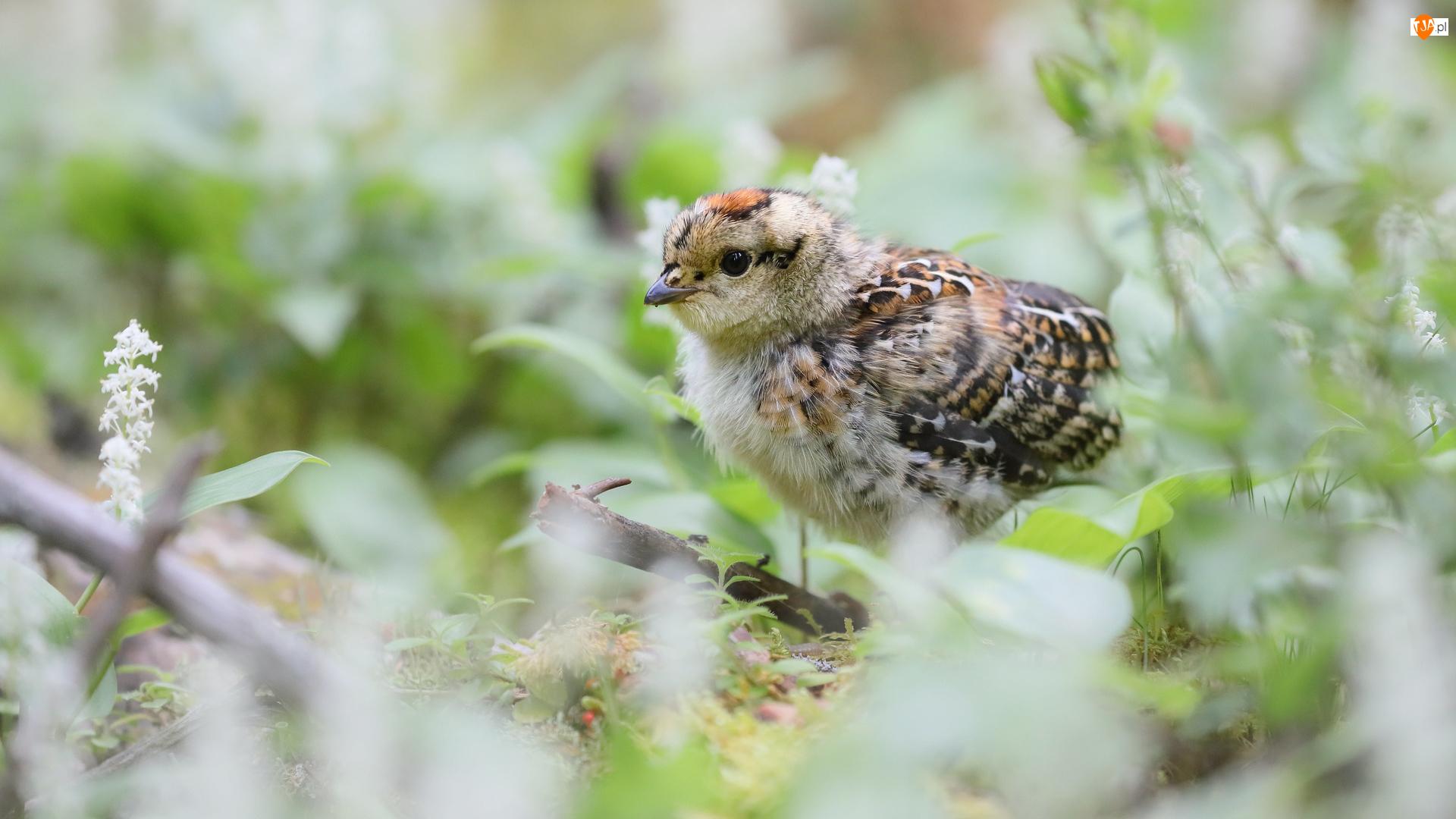 Ptak, Mały