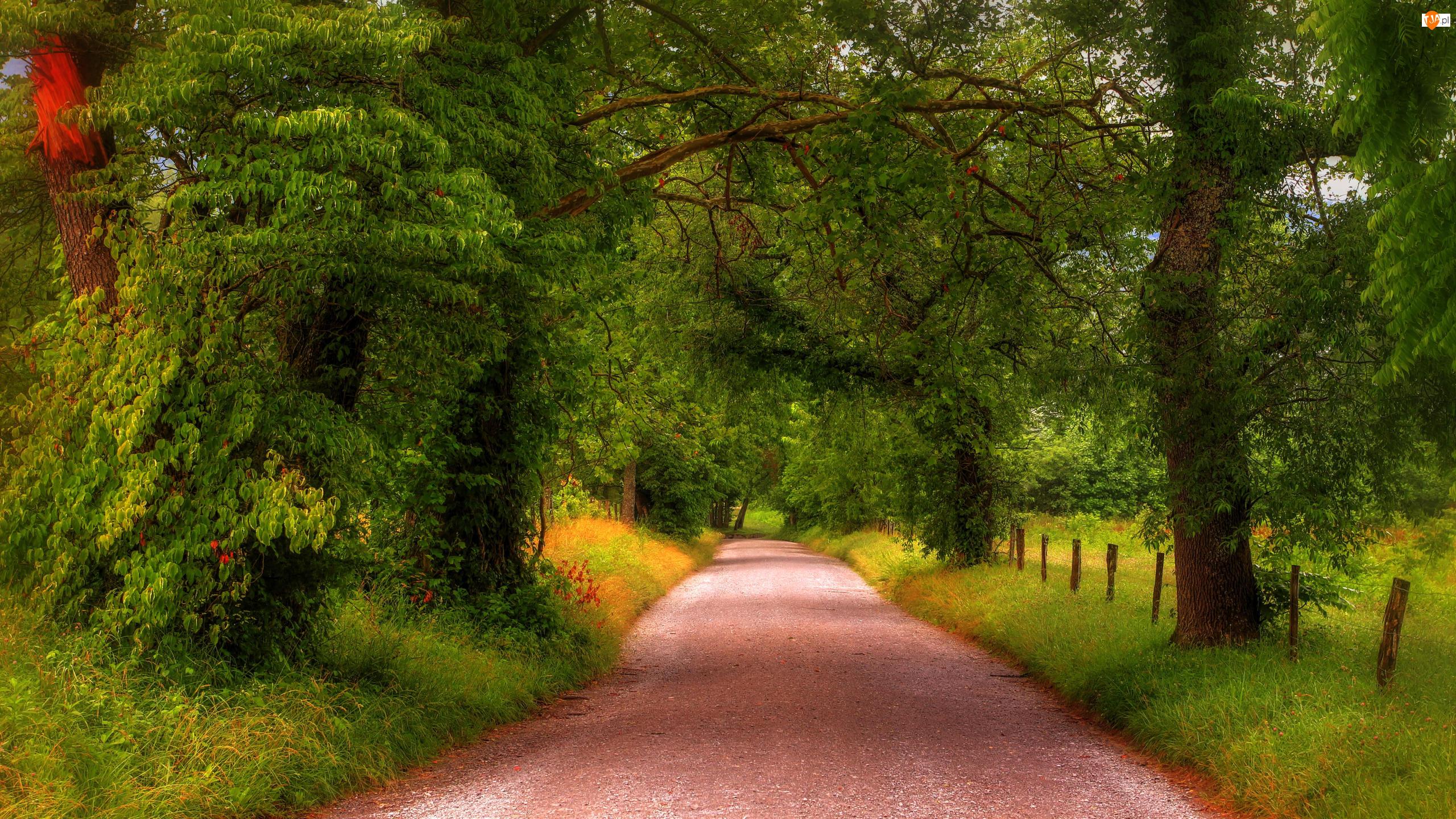 Drzewa, Las, Ogrodzenie, Zieleń, Droga, Trawa