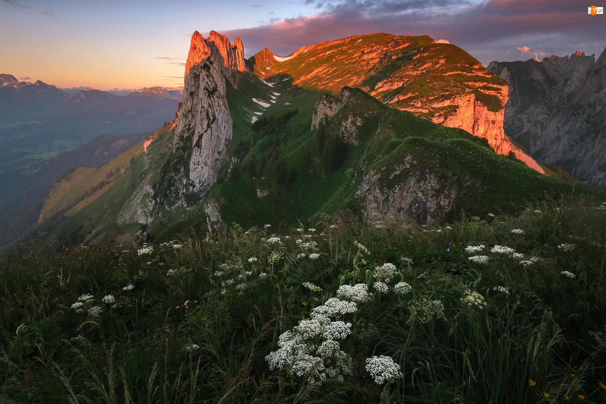 Alpy, Appenzeller Alpen, Szwajcaria, Góry, Łąka, Szczyt, Rozświetlony