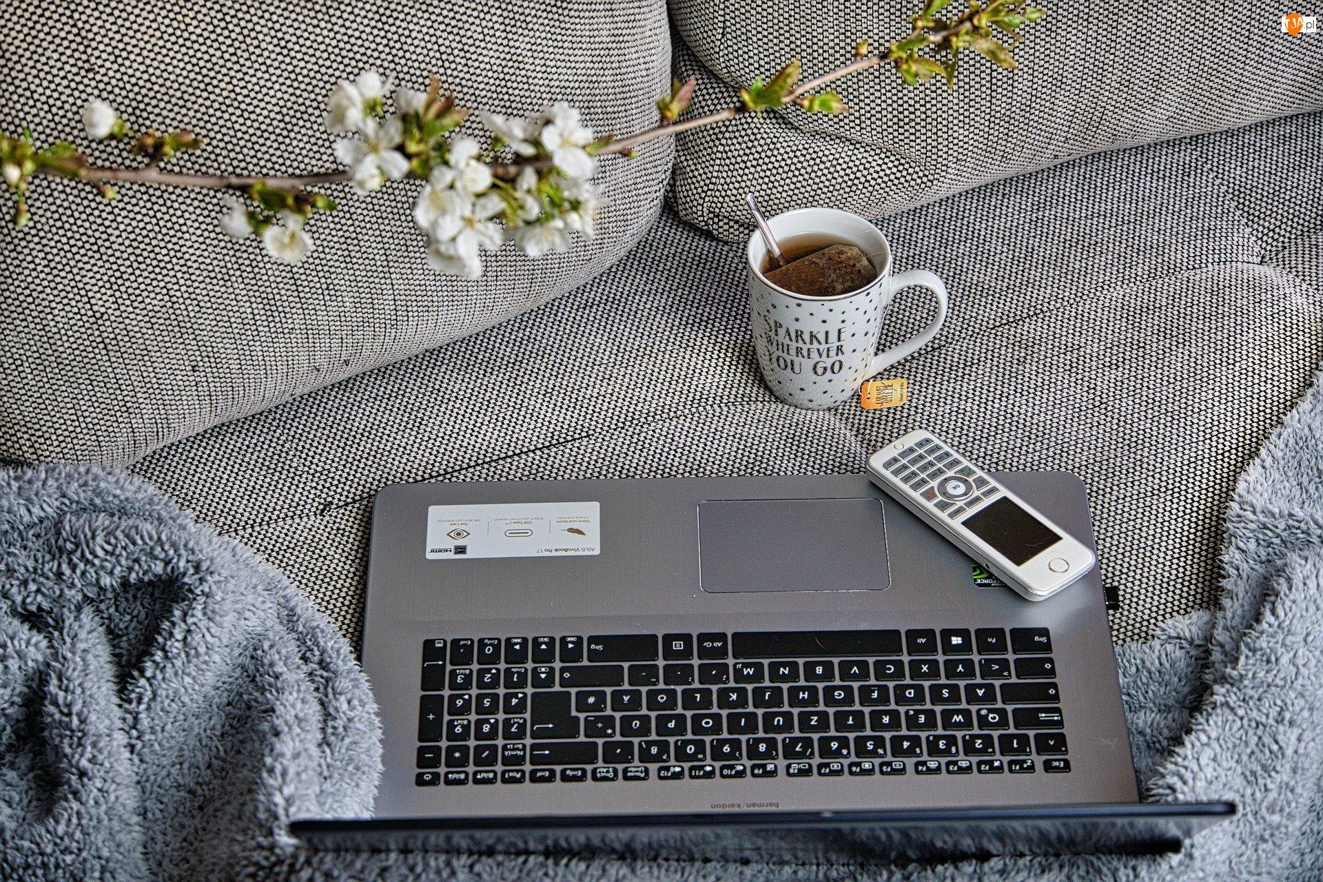 Laptop, Koc, Kubek, Herbata, Kanapa