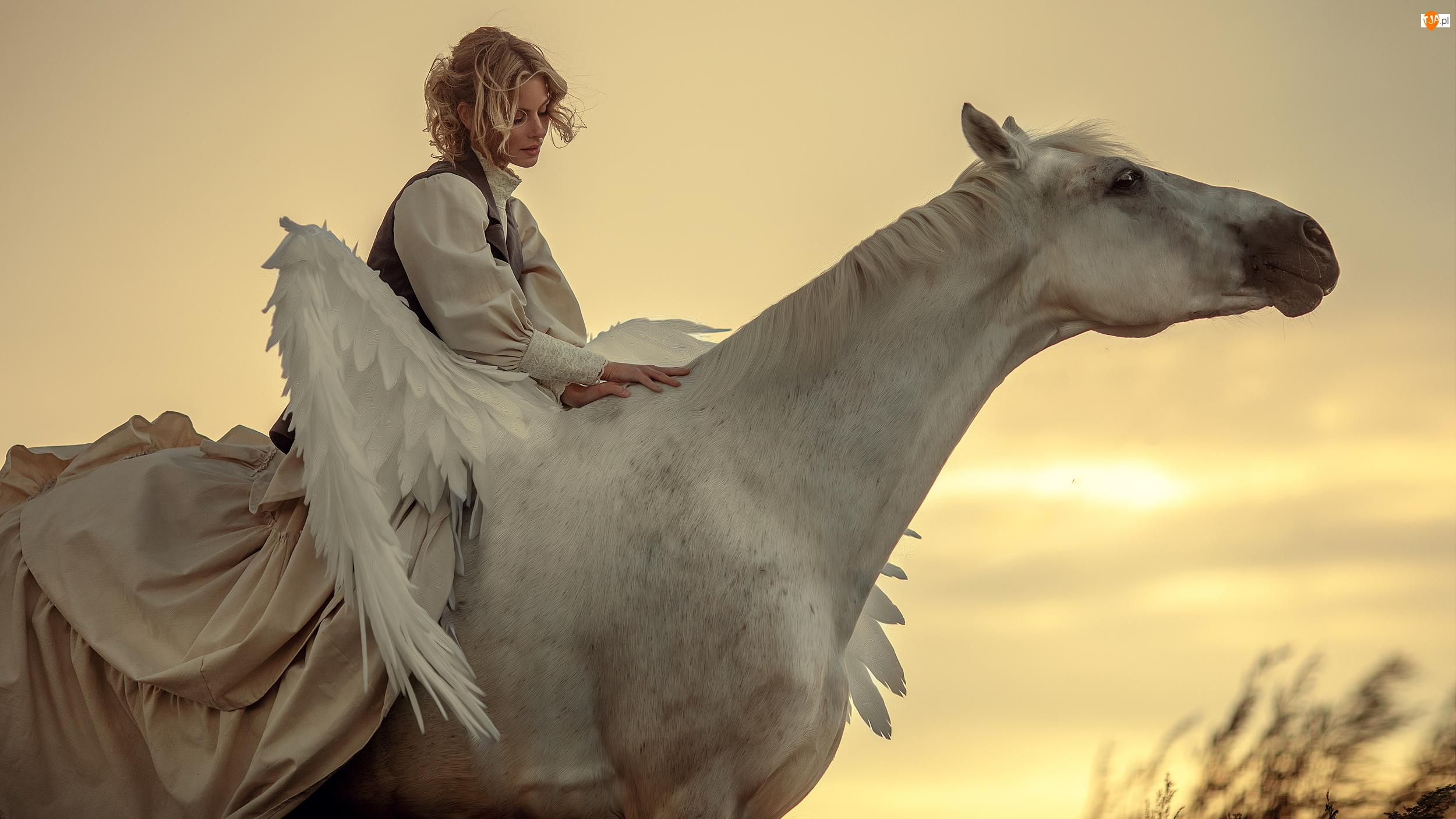 Blondynka, Kobieta, Koń, Pegaz, Biały, Skrzydła