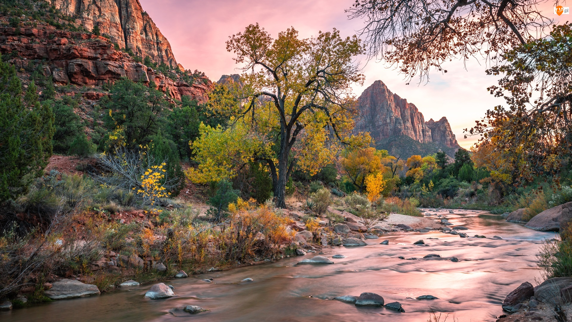 Kamienie, Park Narodowy Zion, Rzeka, Stan Utah, Drzewa, Virgin River, Stany Zjednoczone, Góry Watchman