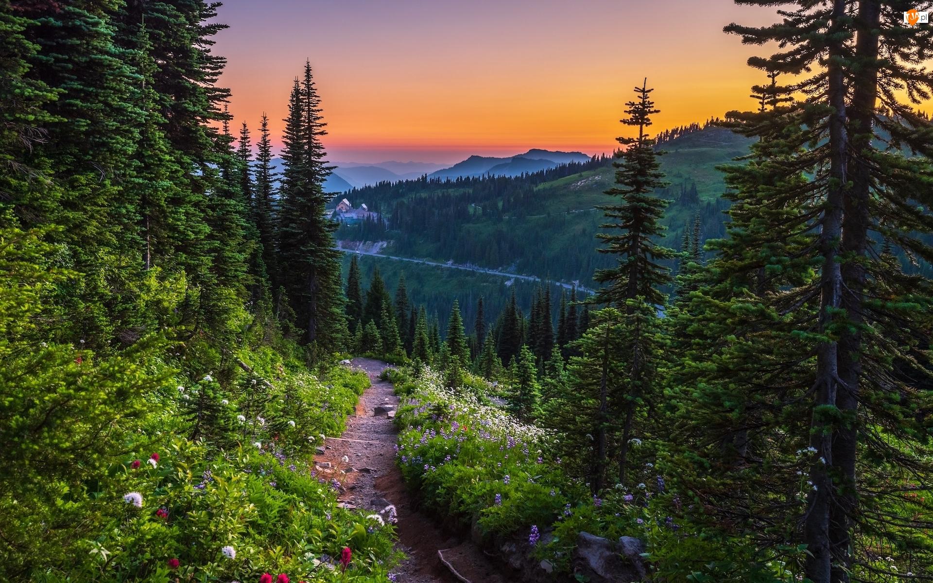 Stany Zjednoczone, Góry, Stan Waszyngton, Droga, Zachód słońca, Drzewa, Świerki, Park Narodowy Mount Rainier, Kwiaty