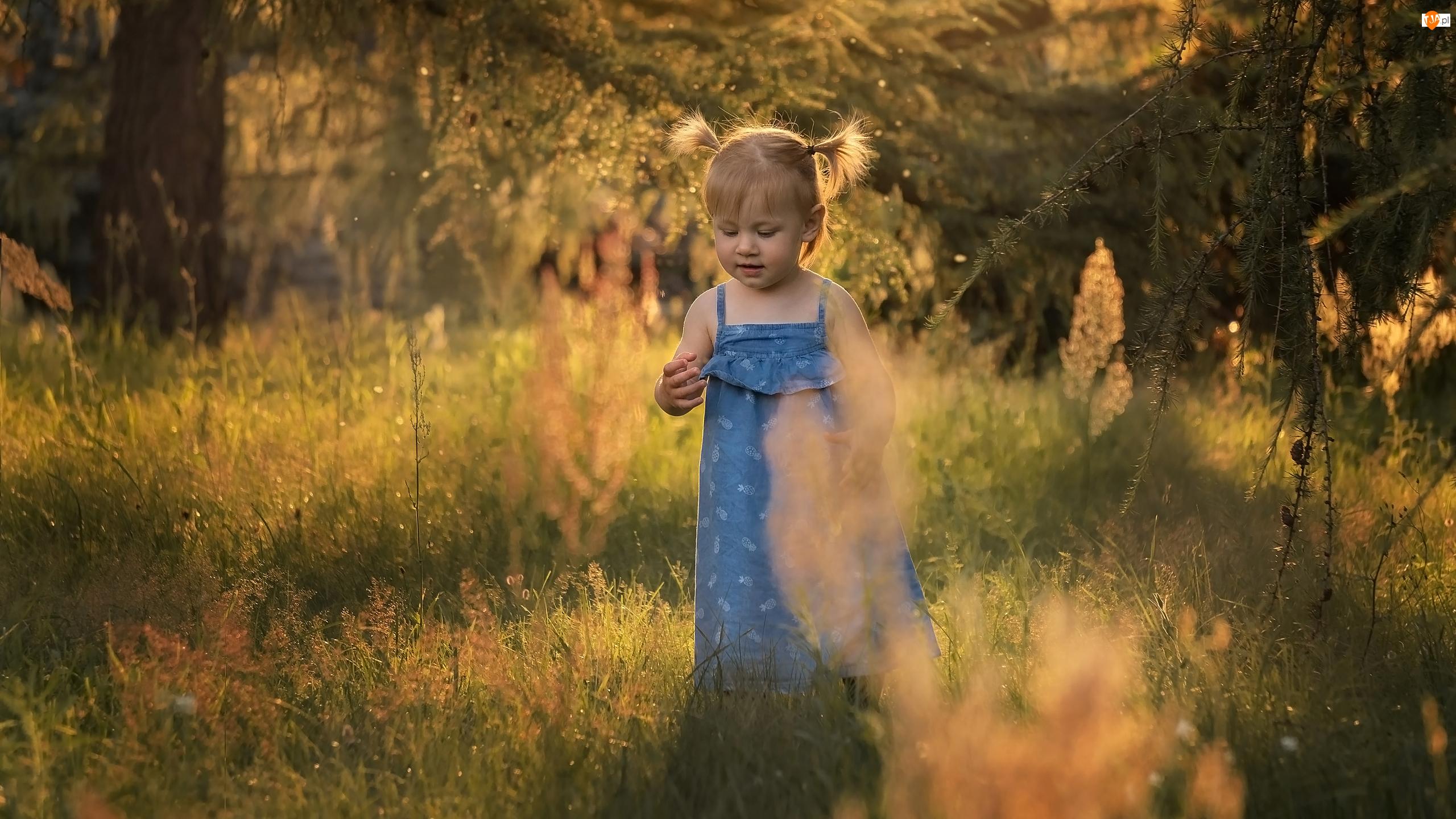 Rozmycie, Dziewczynka, Drzewa, Trawa
