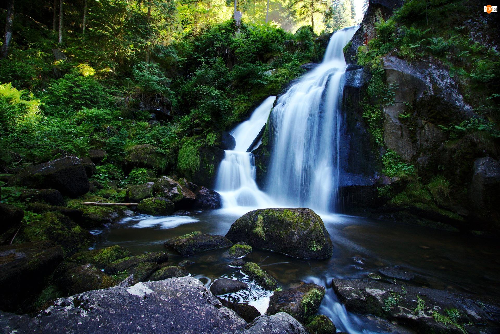 Kamienie, Wodospad, Las, Drzewa